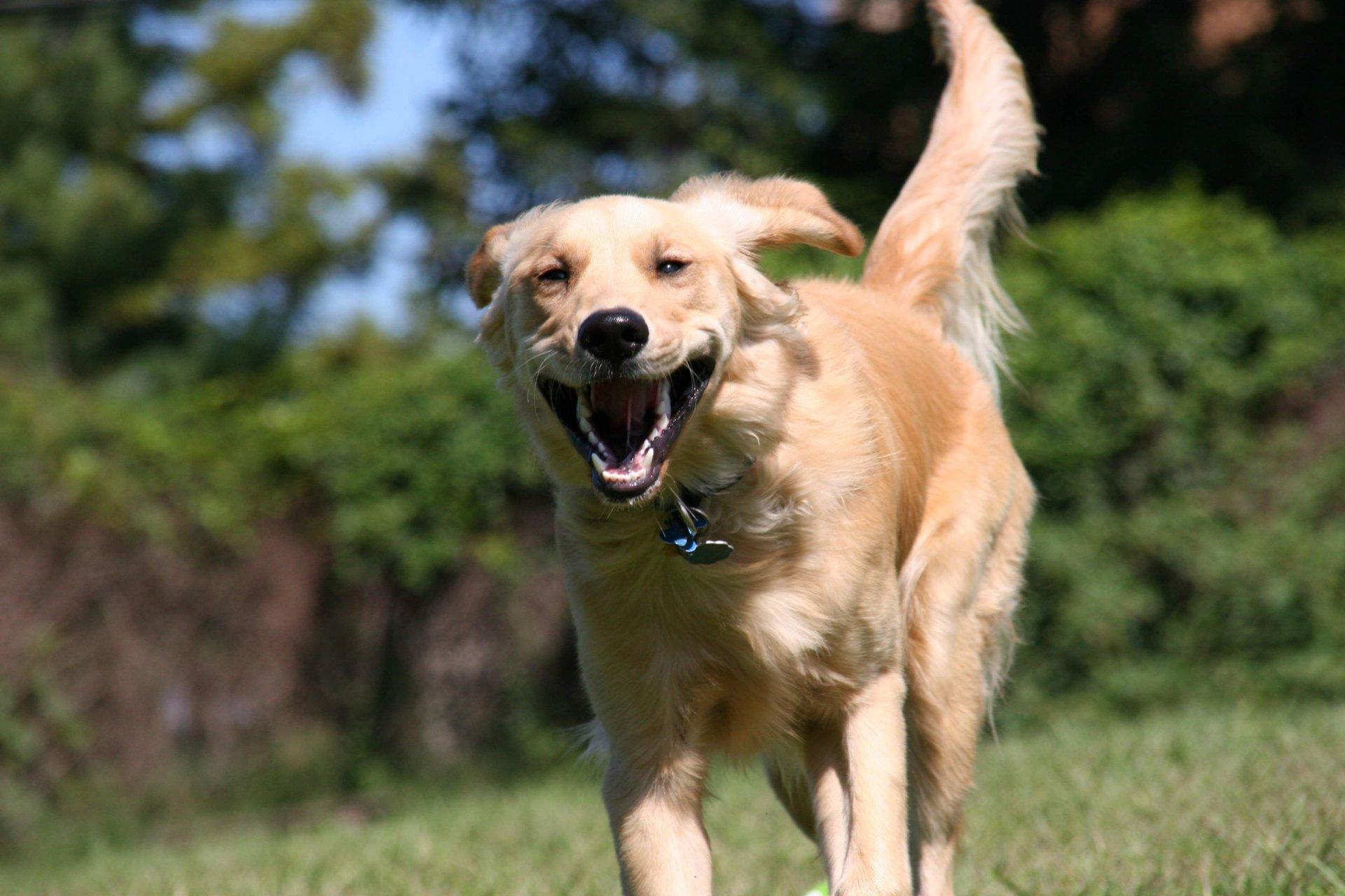 эти картинки собака бежит мне интересно, знаете