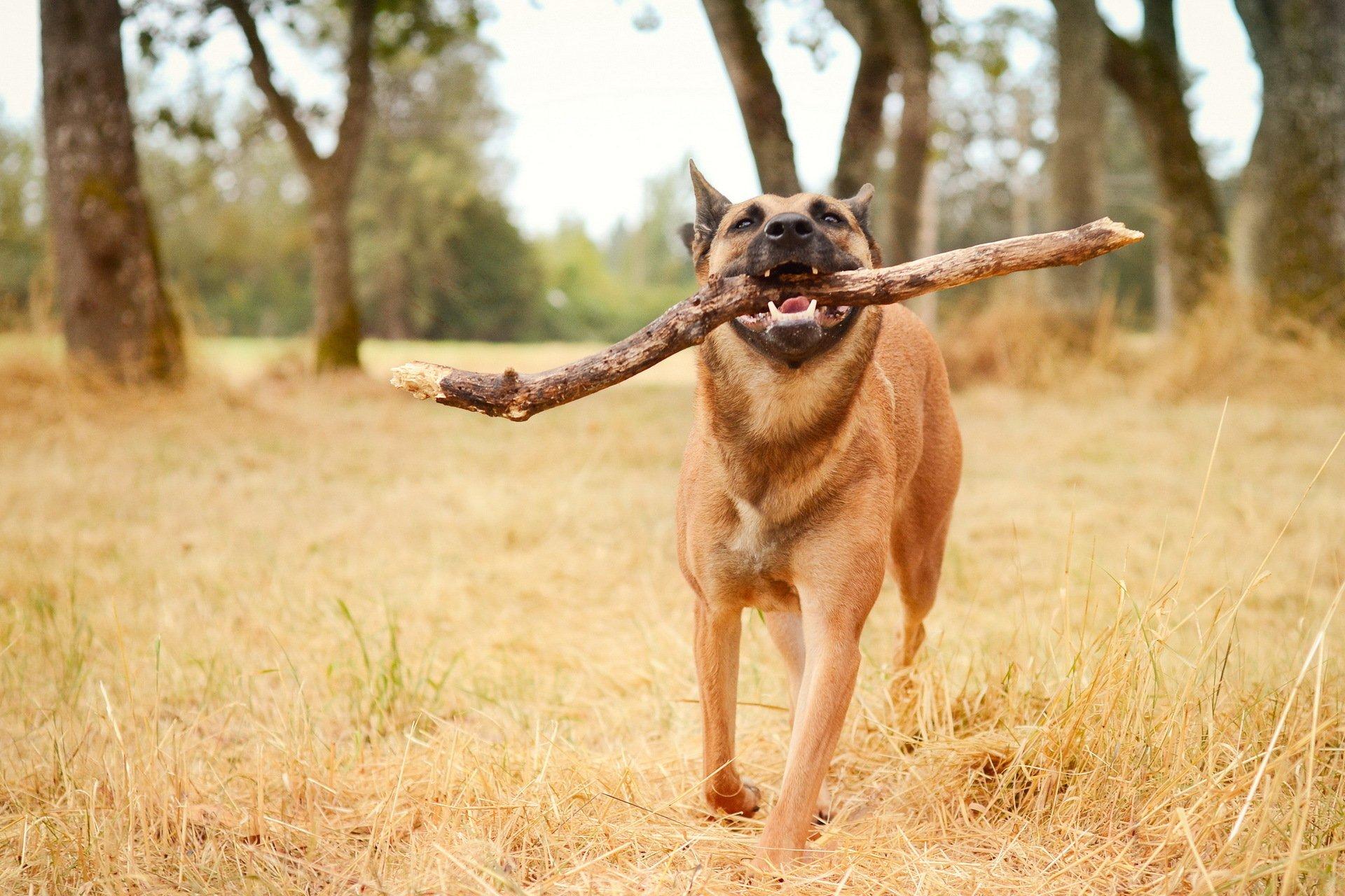 пёс язык собака на бревне  № 2524076 без смс