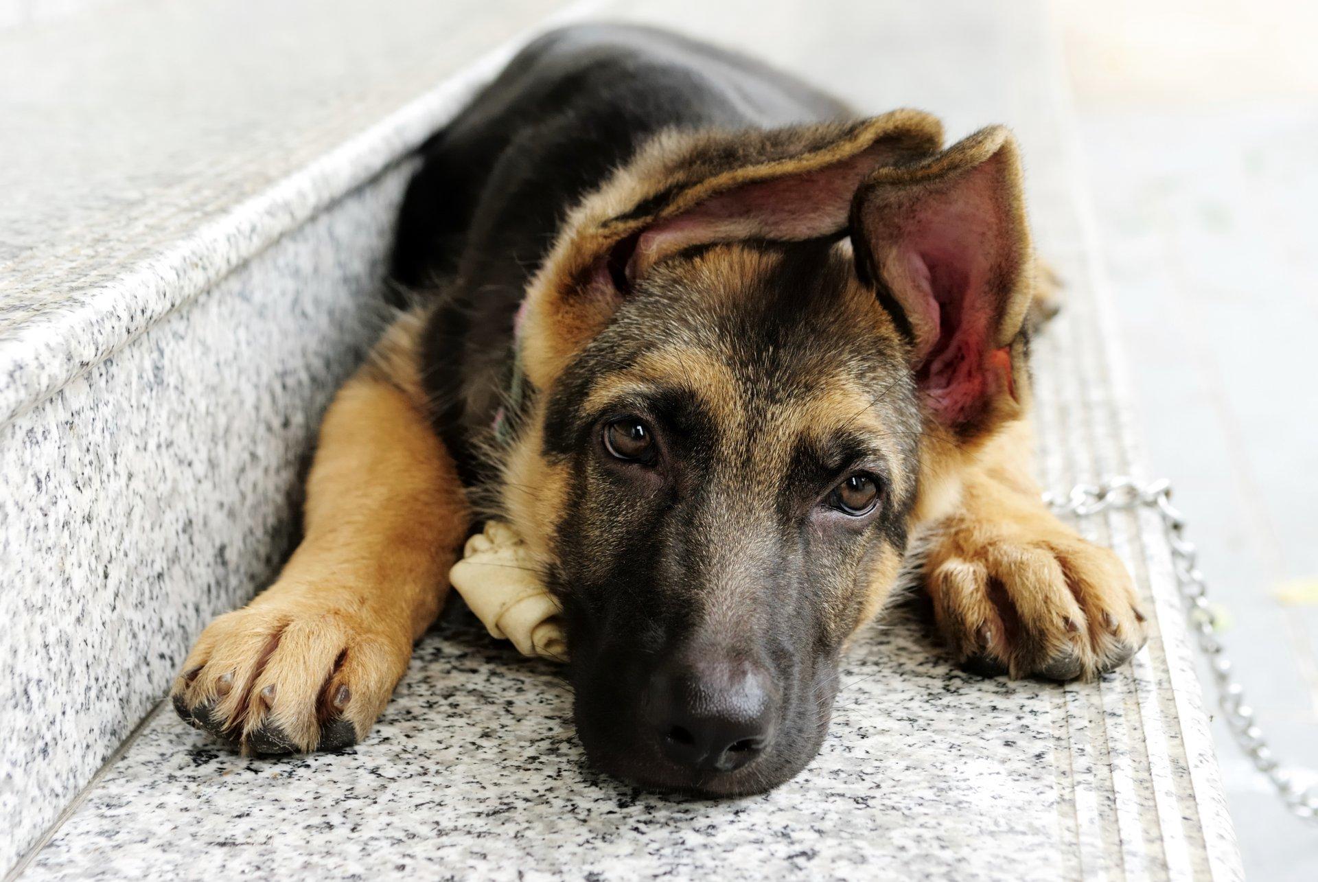 Смотреть собачий картинки
