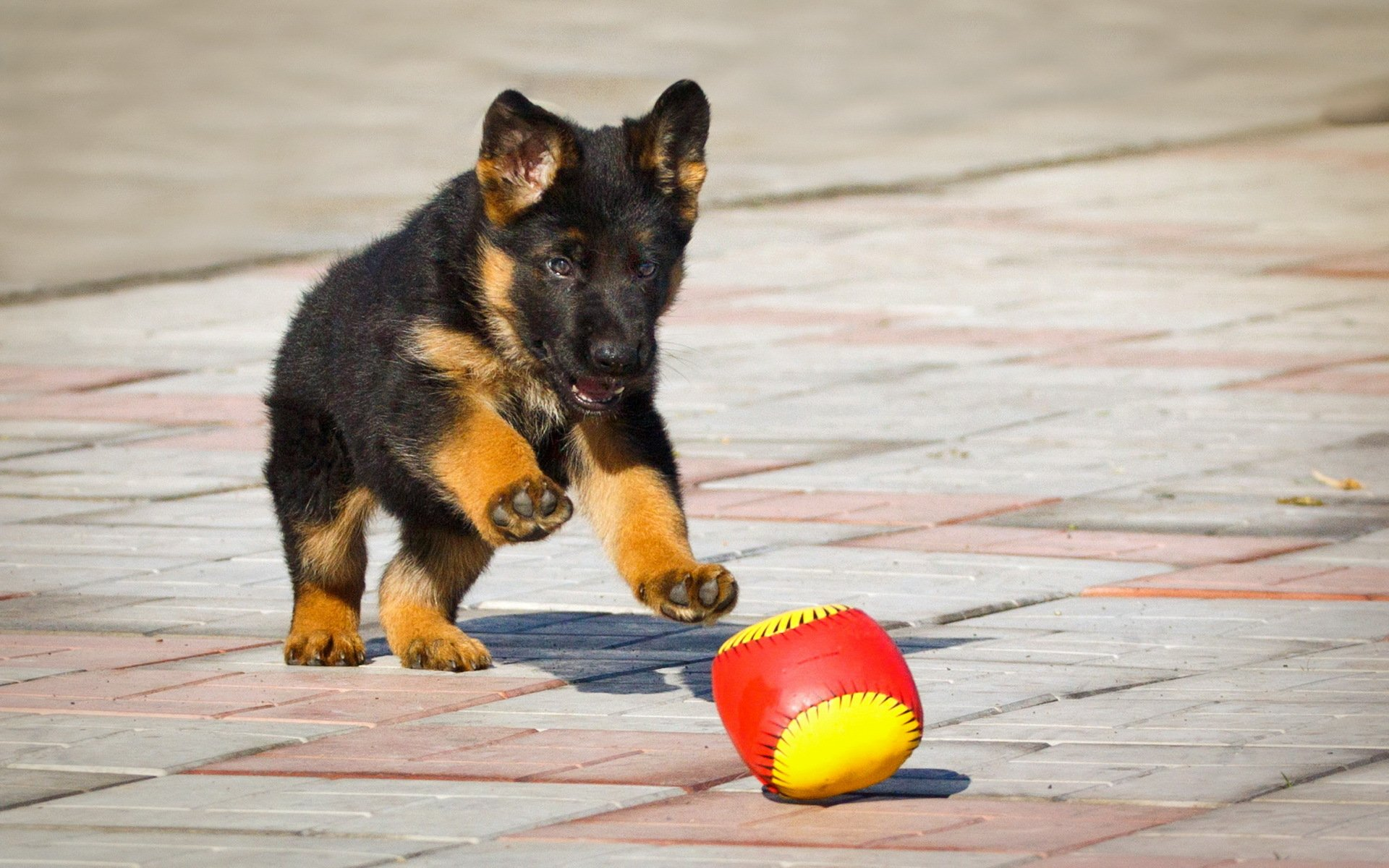 Играющие щенки бесплатно