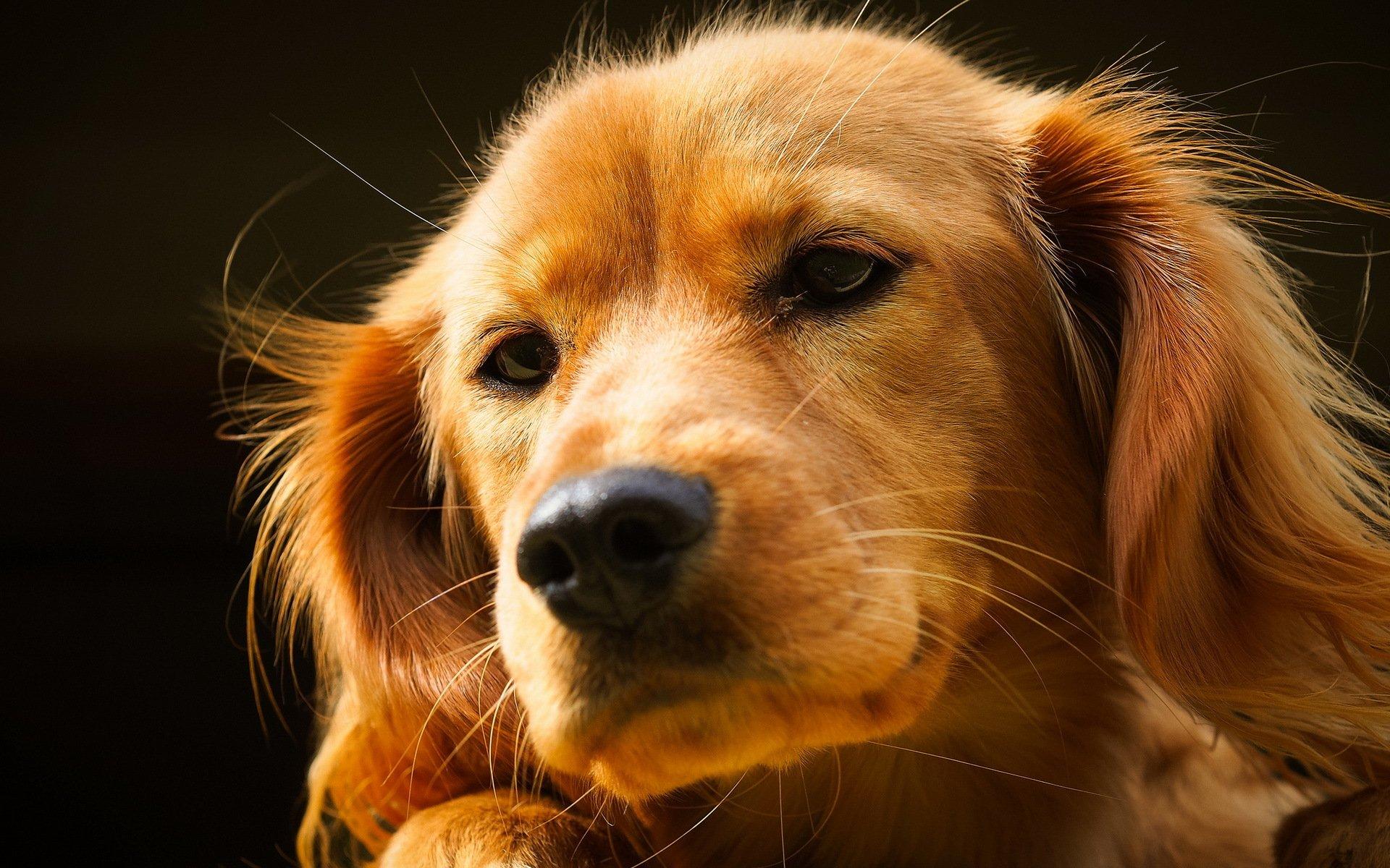 обои на рабочий животные собаки нашем случае