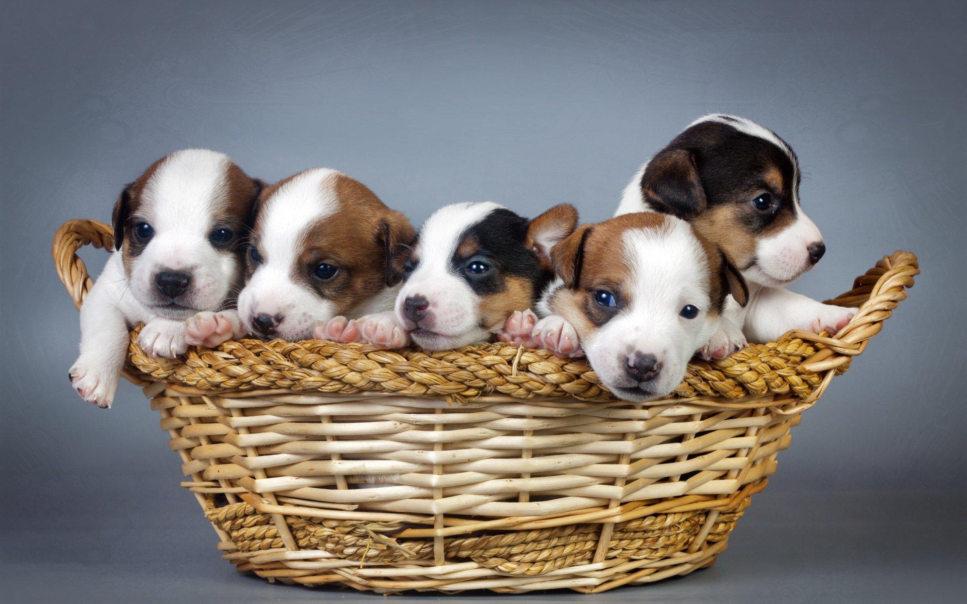 снимал картинка для животные собаки и щенки если