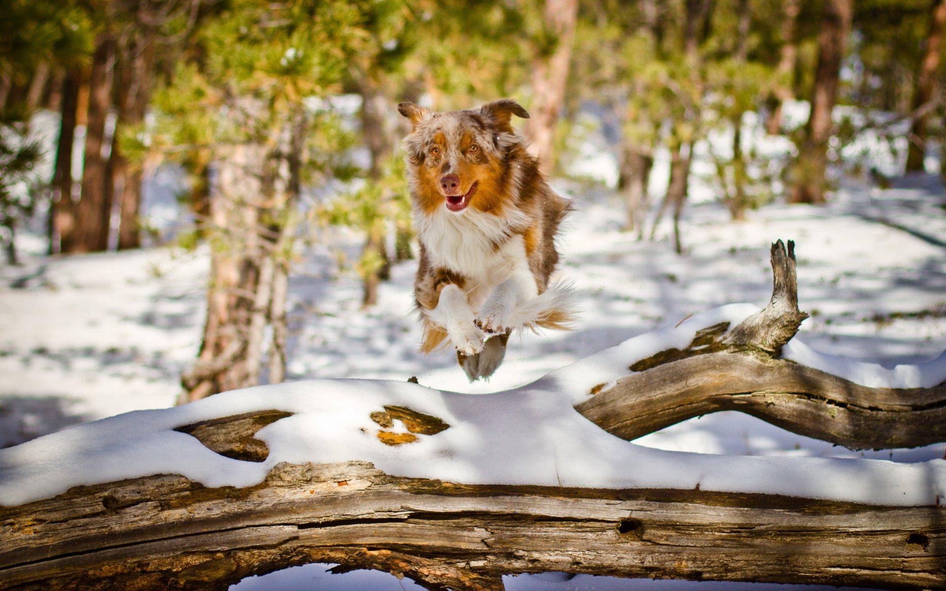 Красивые картинки с природой и животными зима