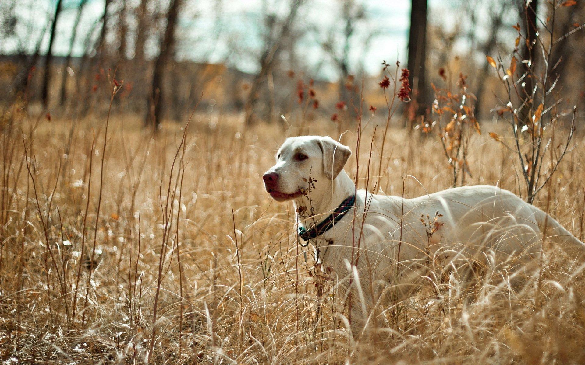 Собака в поле скачать