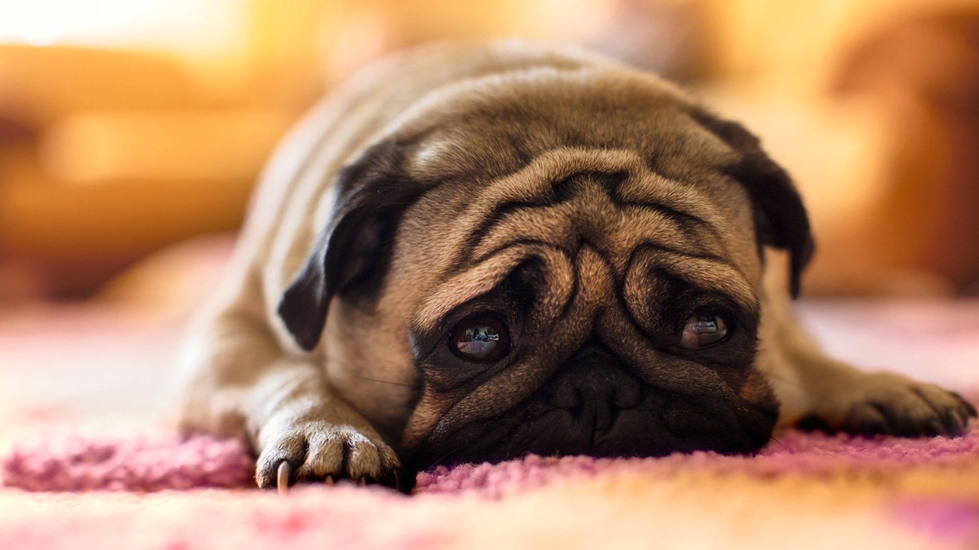собака грусть загрузить