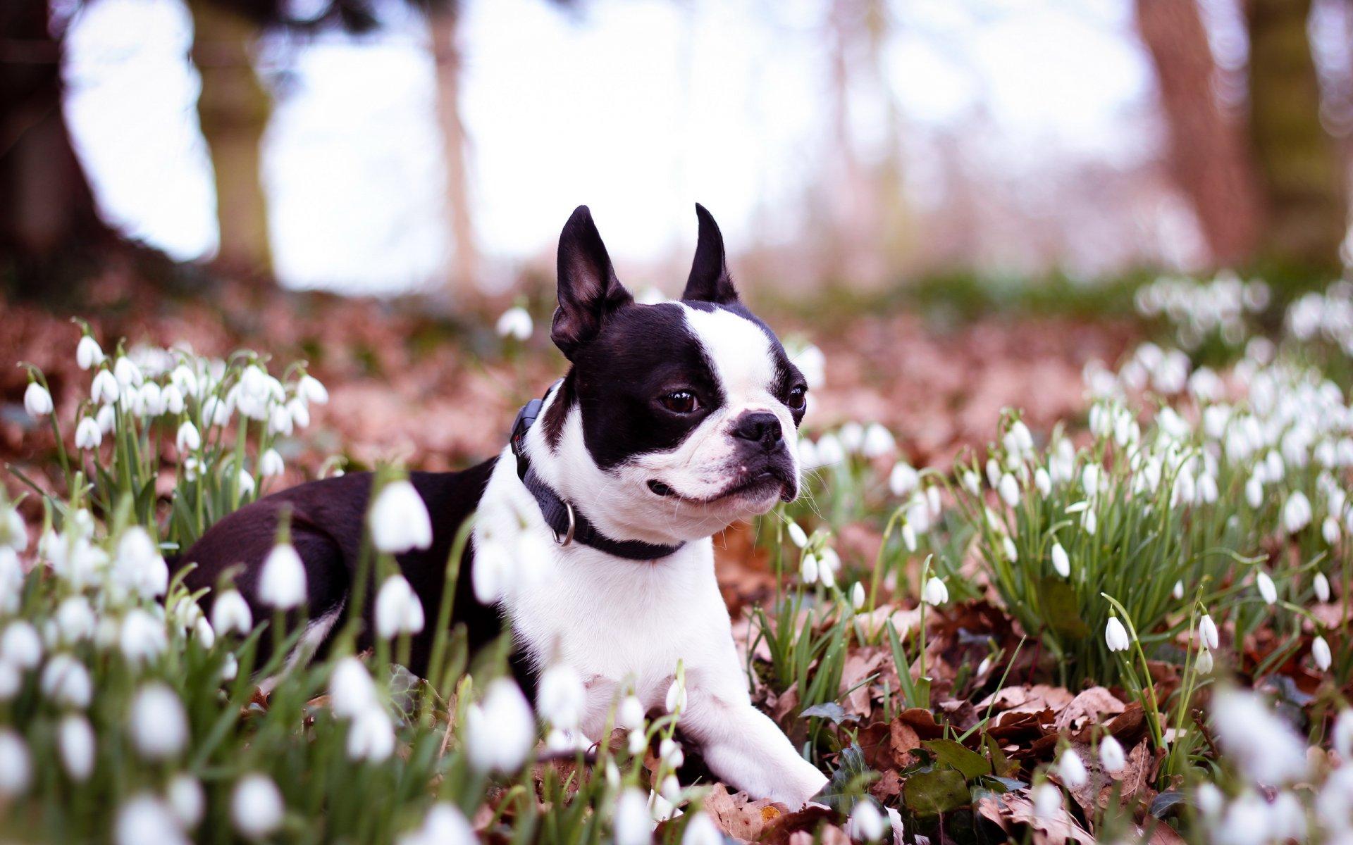 весна картинки с собаками определении