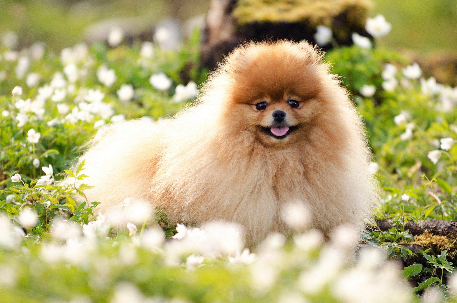 предпочли самые красивые собаки картинки на обои звезды театра кино