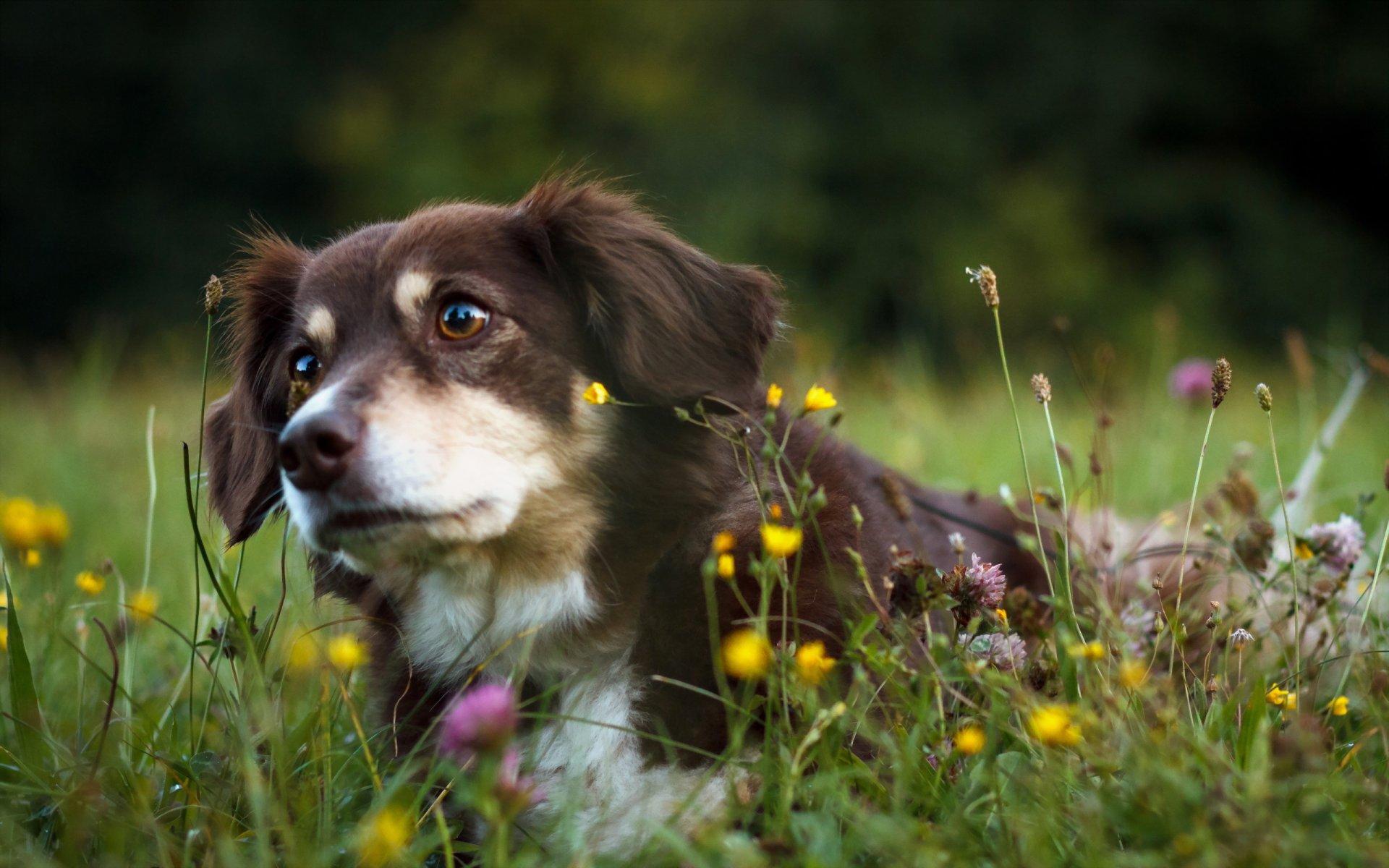 животные собака трава природа скачать