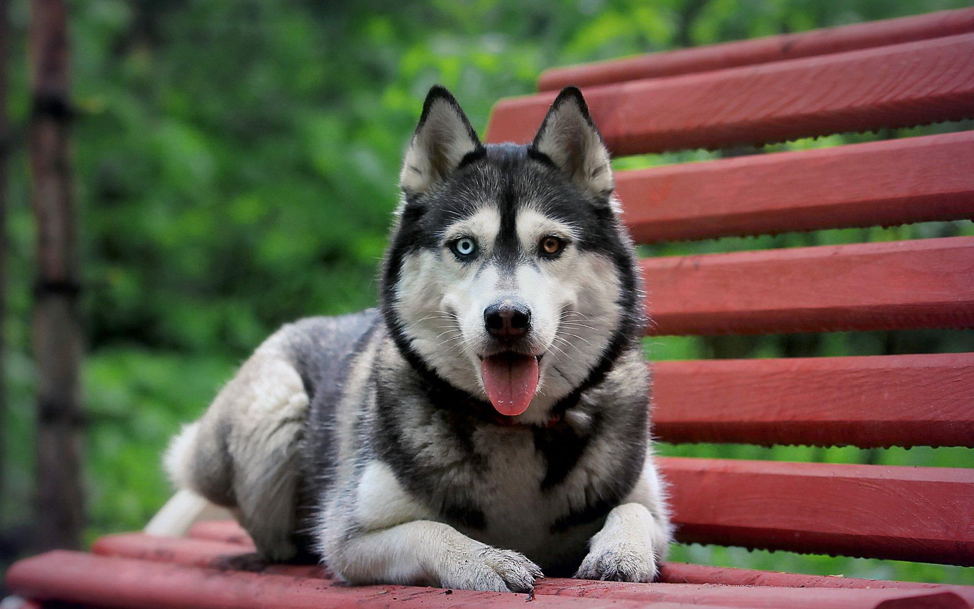 самые красивые собаки картинки на обои название