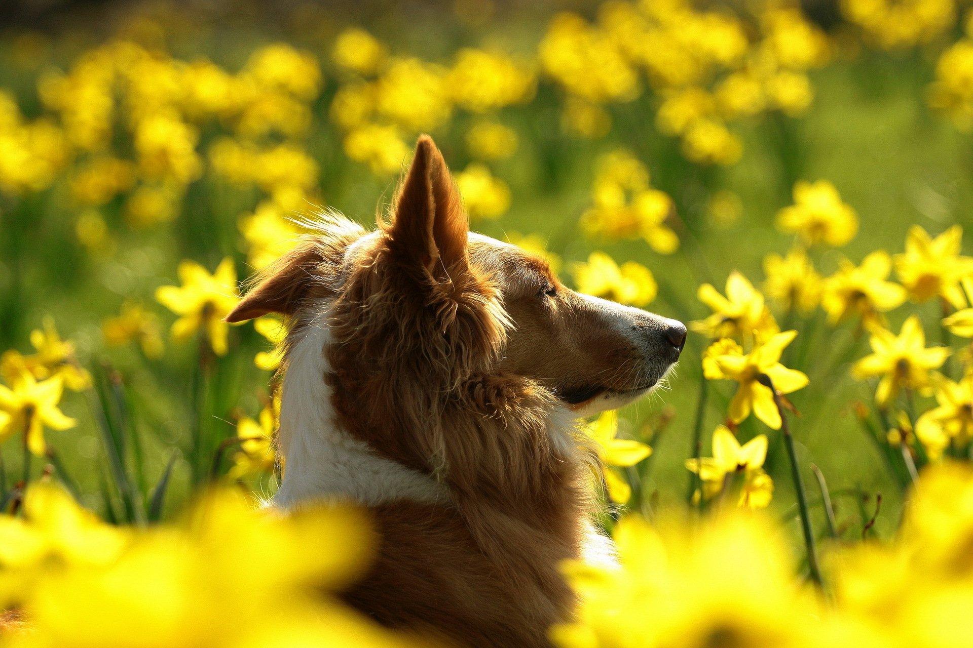 жители картинки на рабочий стол животные летом в цветах китти один самых