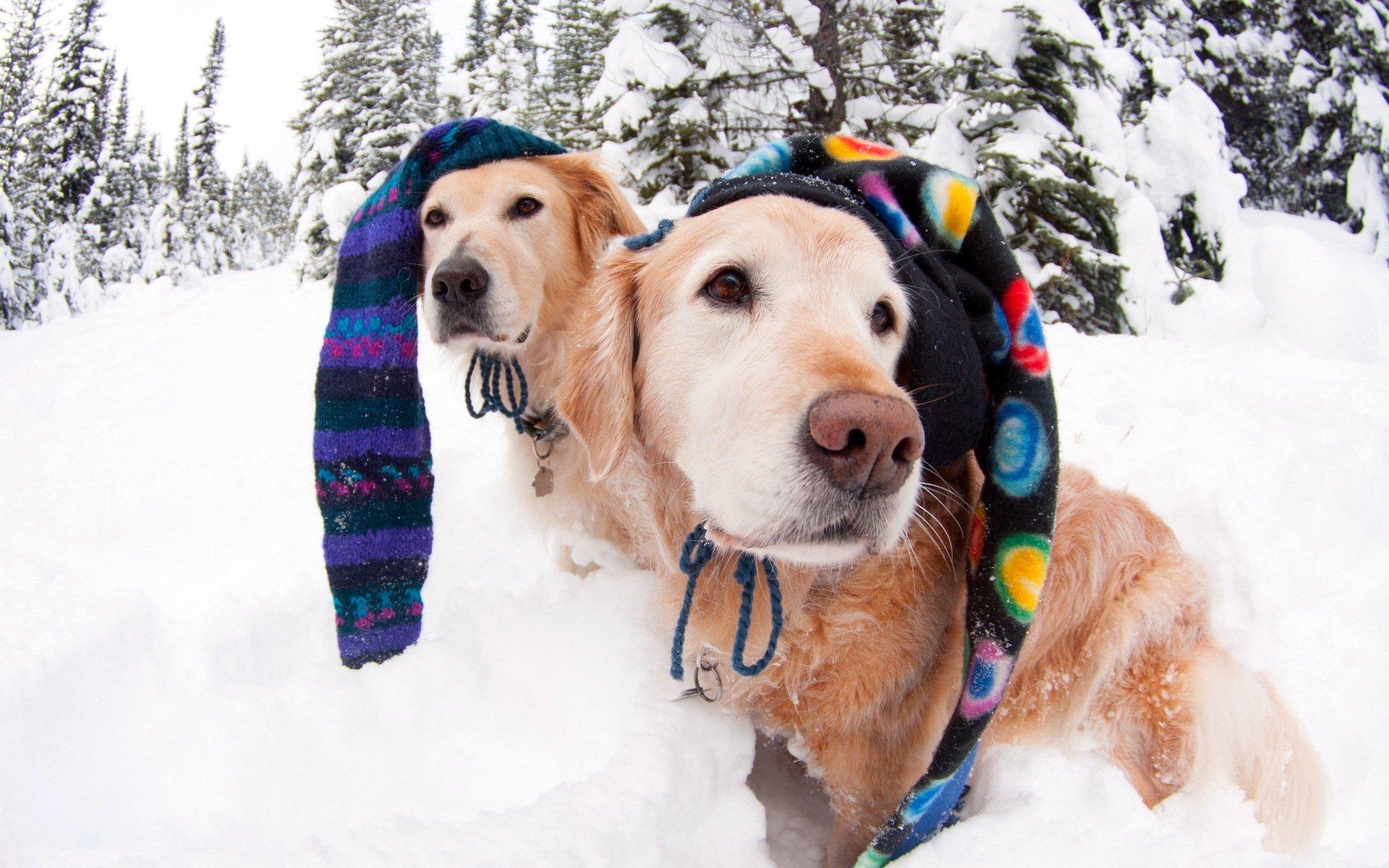 собачки на зимней прогулке  № 1978638 загрузить