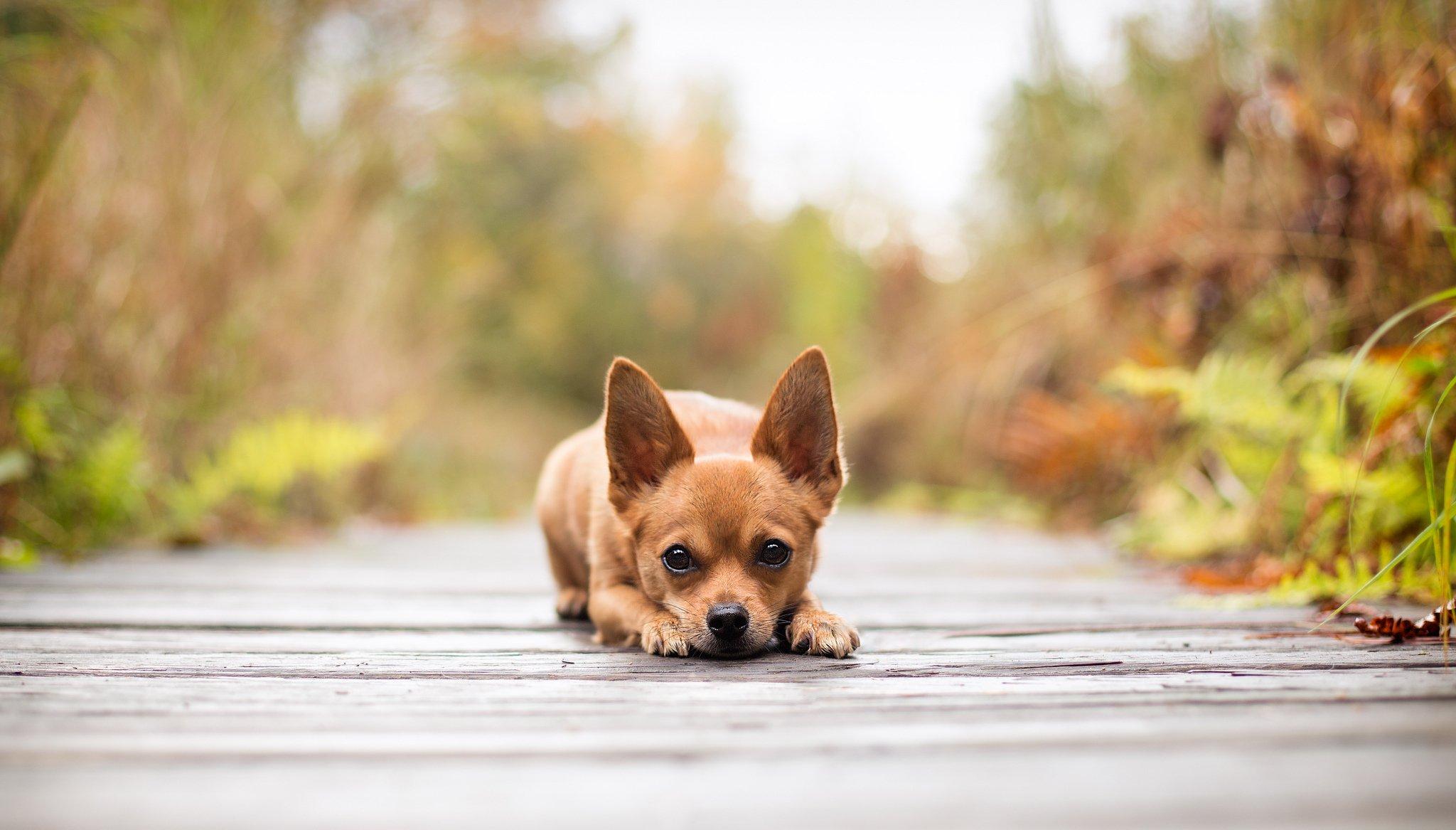 собака взгляд dog view  № 647824 без смс