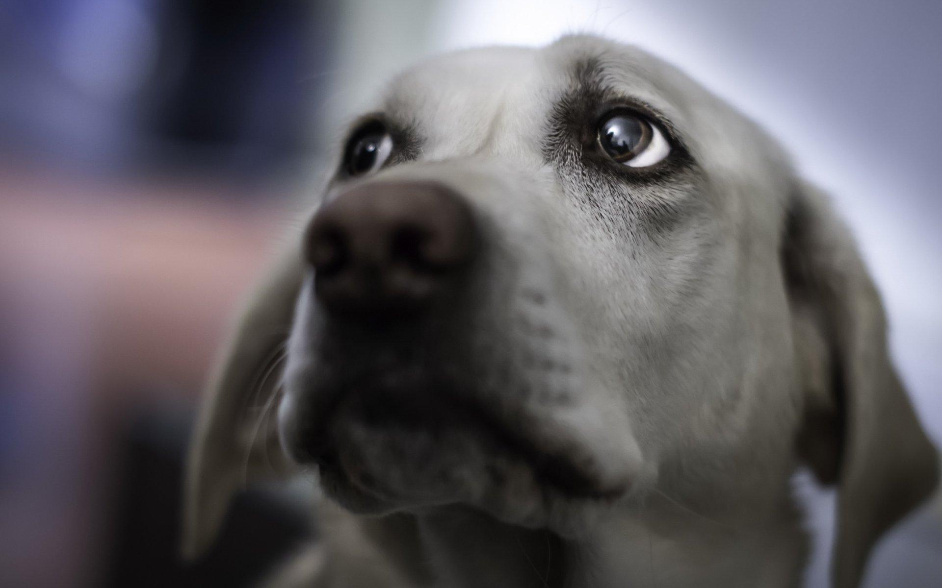 Картинки грустные глаза животных, конверты посткроссинга открытки
