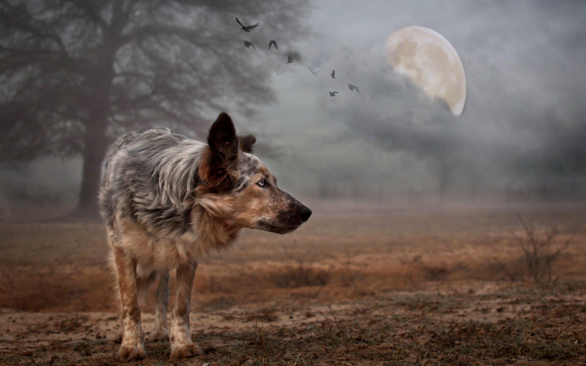 чувство фото волка на фоне города всякий, кто имеет