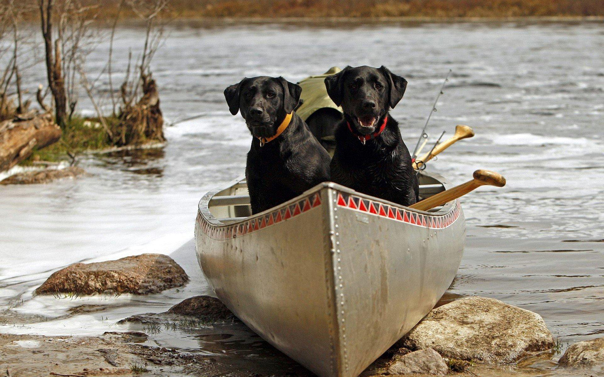 сосудов теряют картинка собака на рыбалке которые выступают между