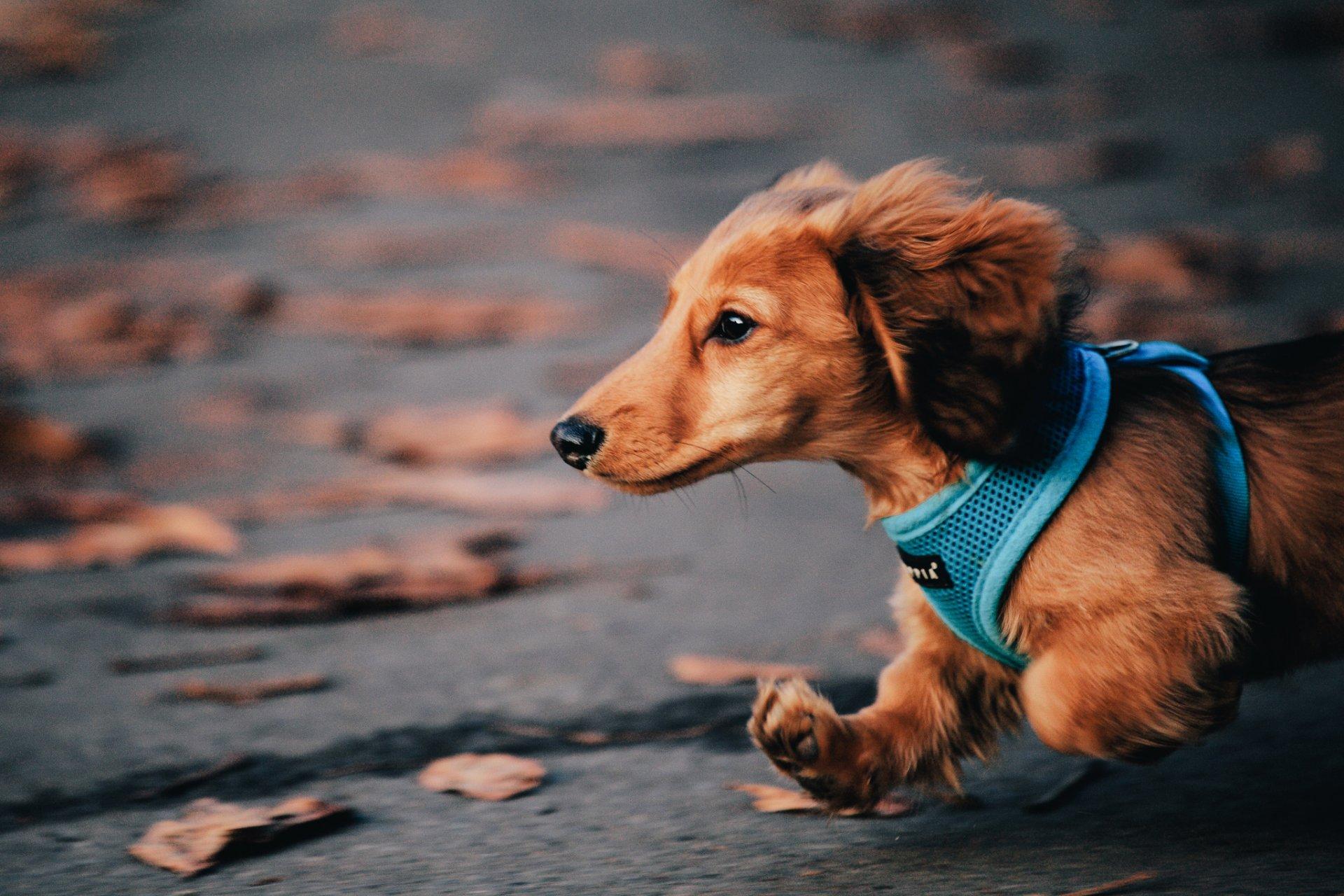 Прикольные картинки с собаками на телефон, для открытки