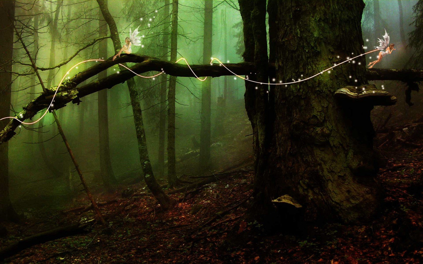 enchanted fairy forest - HD1680×1050