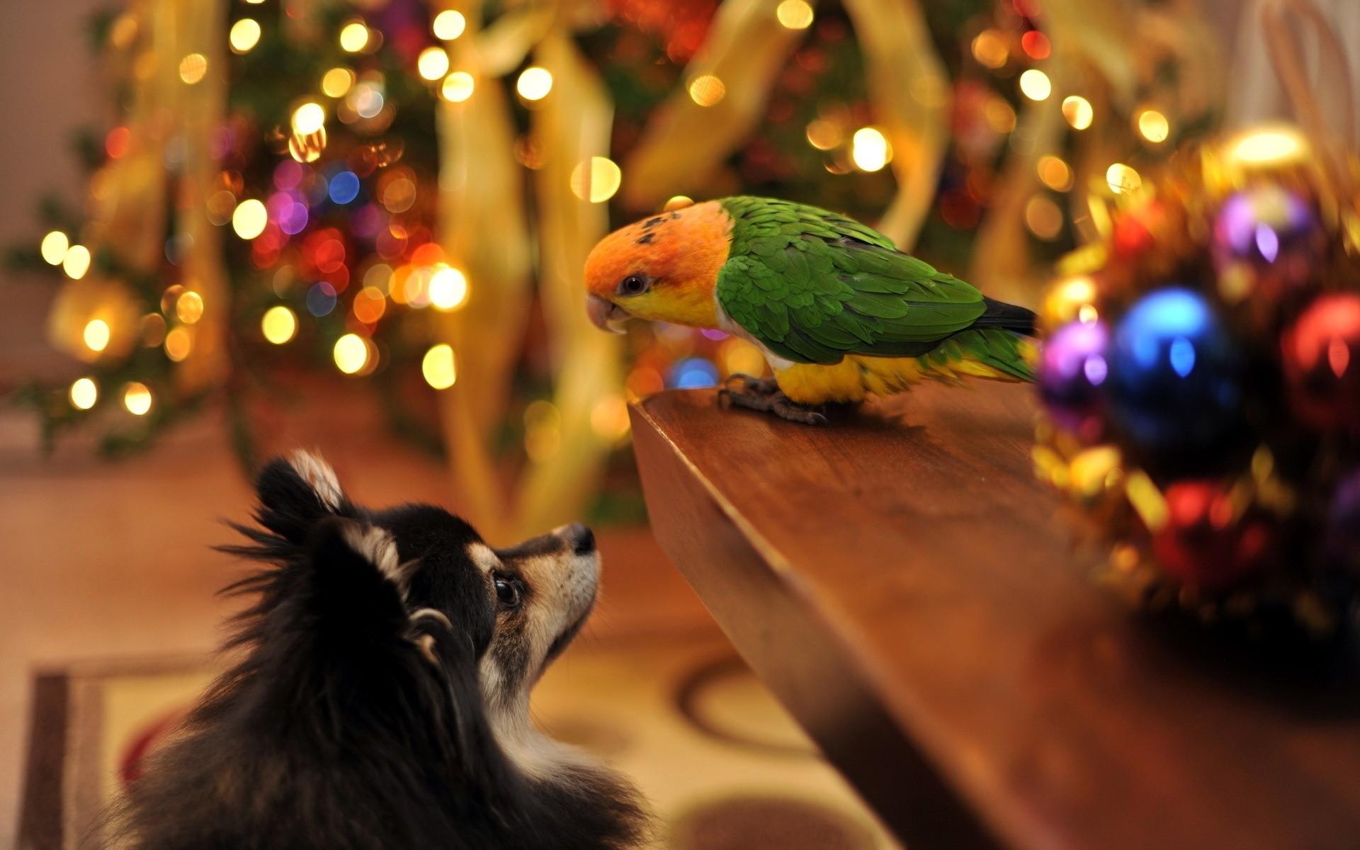 Картинки праздничные с животными, днем рождения дочке