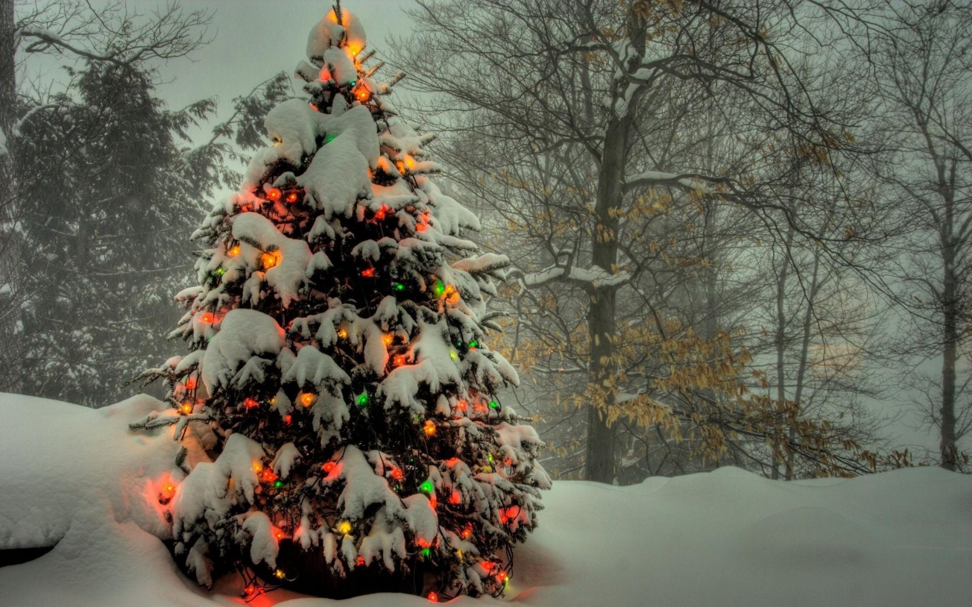 Открытки днем, картинки с новым годом с елкой