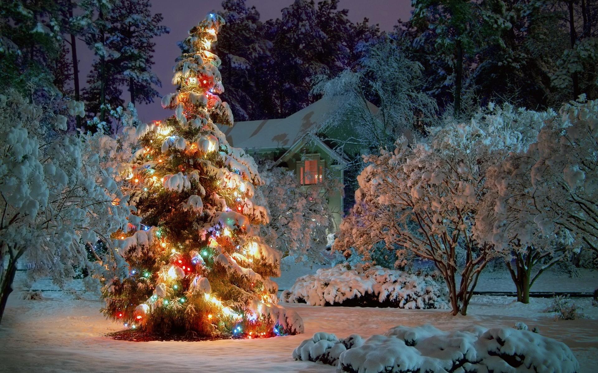 картинка новогодней елки красивая