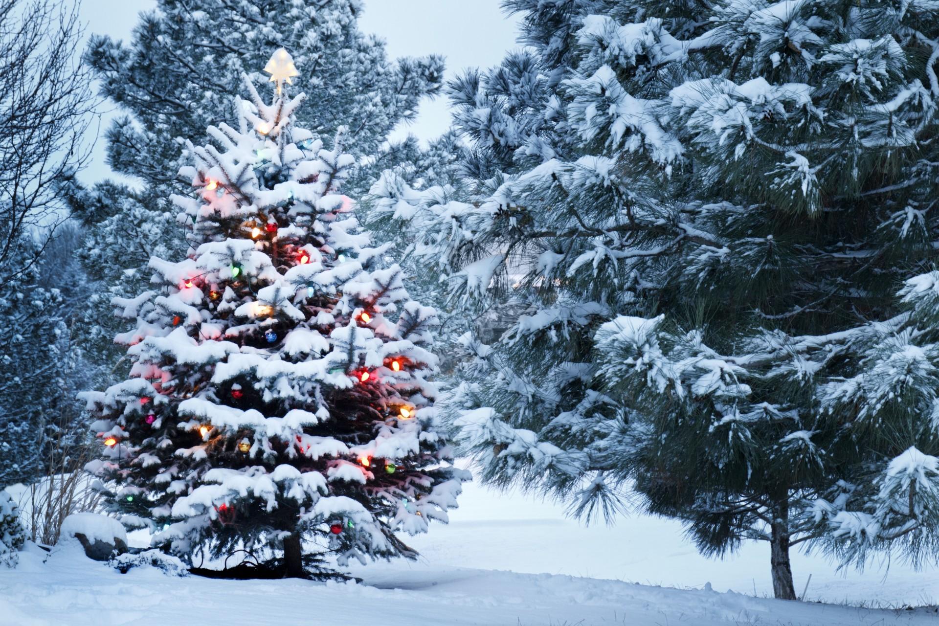 Зима елка картинки