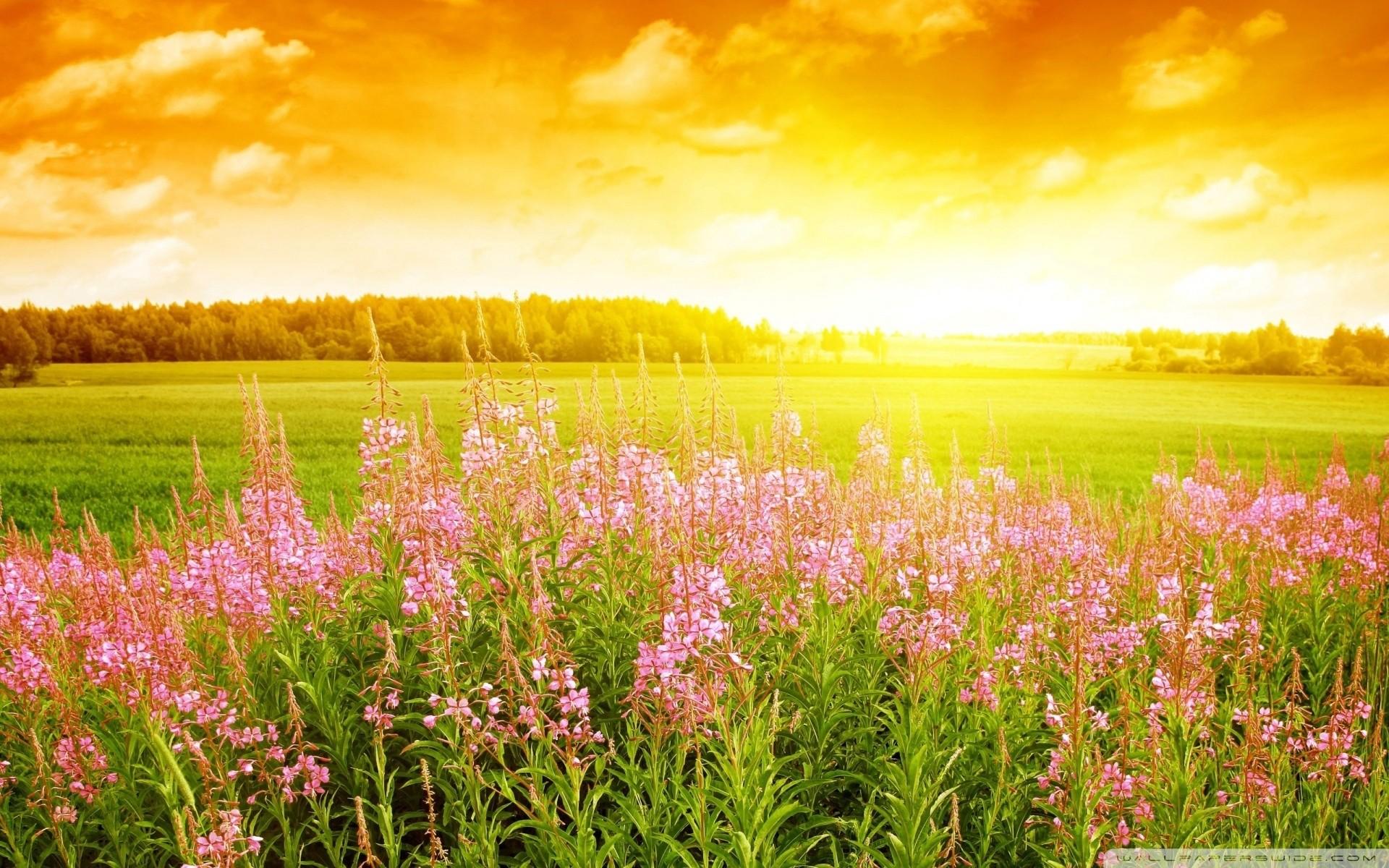 абхазию обои на рабочий стол август природа лес цветы принято считать
