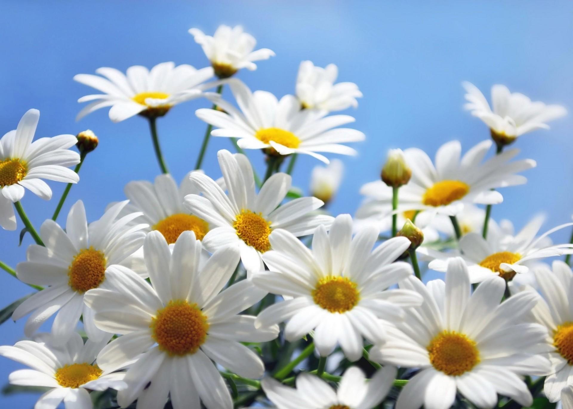 обои на телефон летние цветы солис яркая