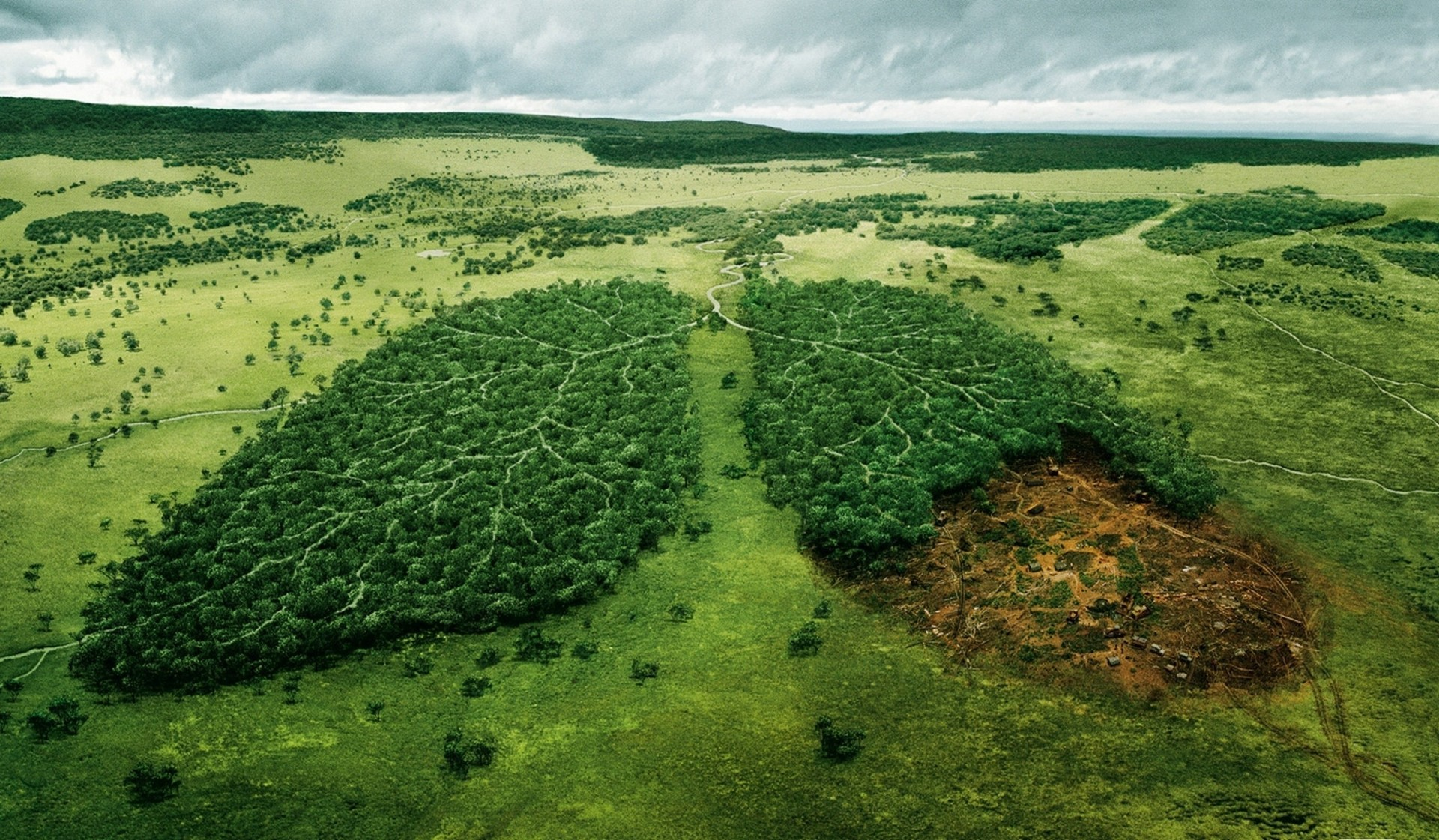 destruction of world s forest inevitable as our need for land and food grows 8 fantastic solutions to deforestation trees due to the nature and extent of forest destruction  and protecting forests to ensure permanence of the world's.