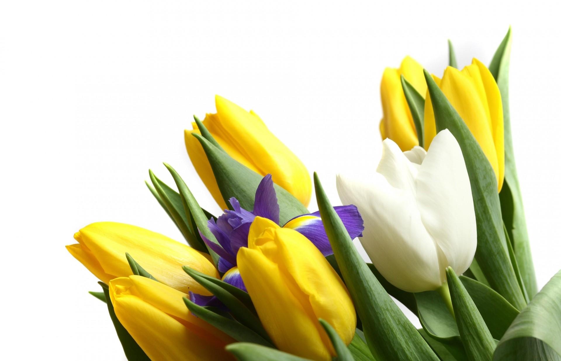 Открытки с тюльпанами без надписей, картинки для