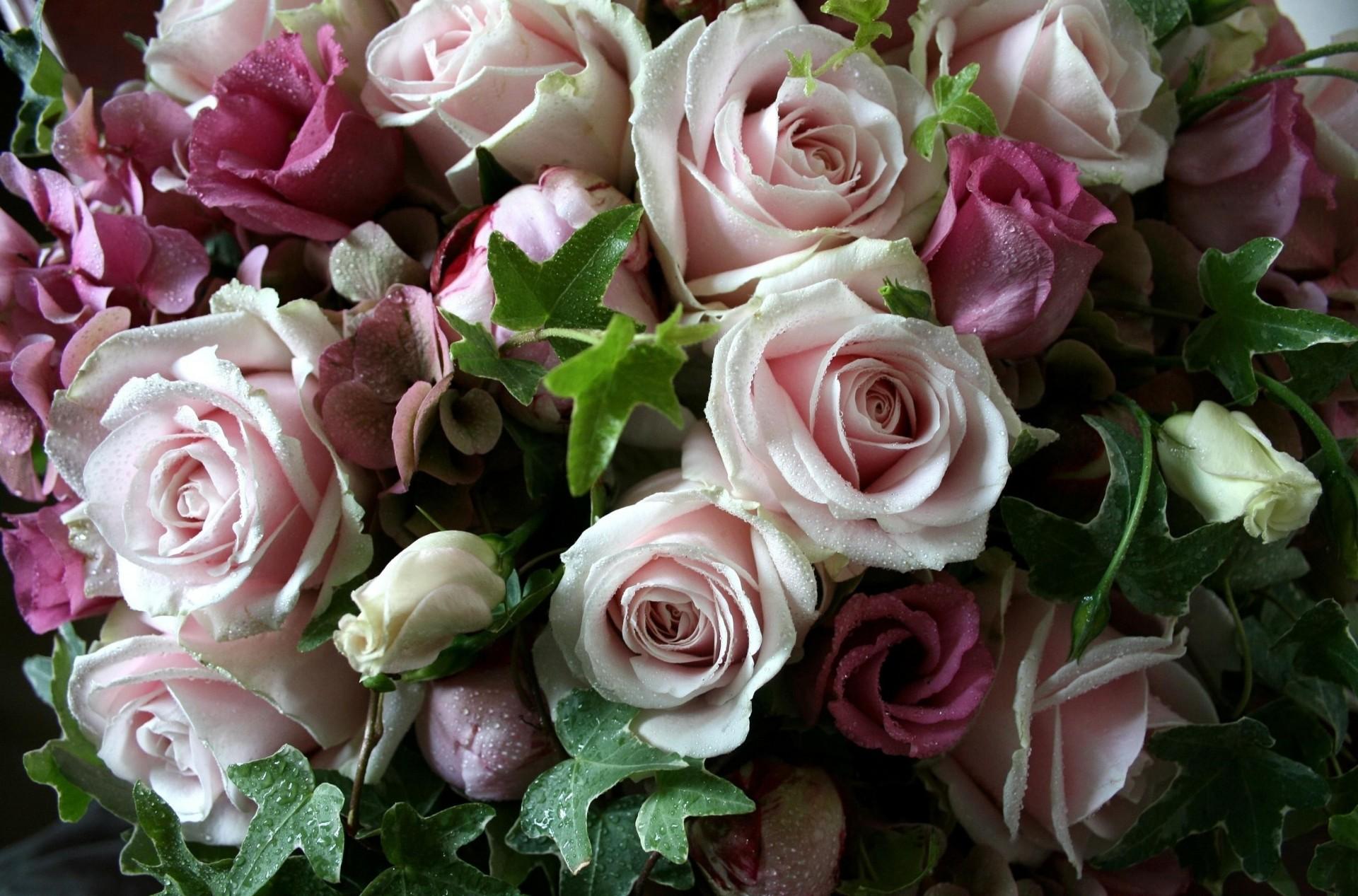 Букет роз фото высокого качества, букет цветов фотографии