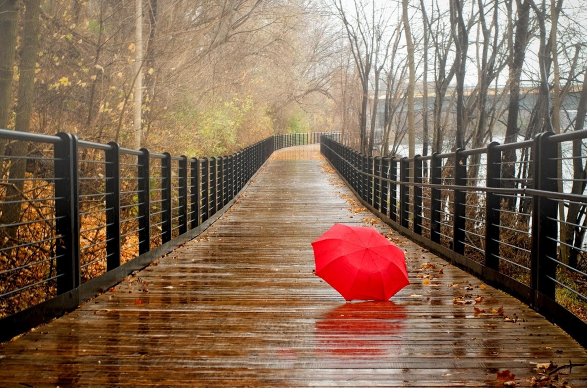 С зонтиком в лесу  № 3394123 загрузить