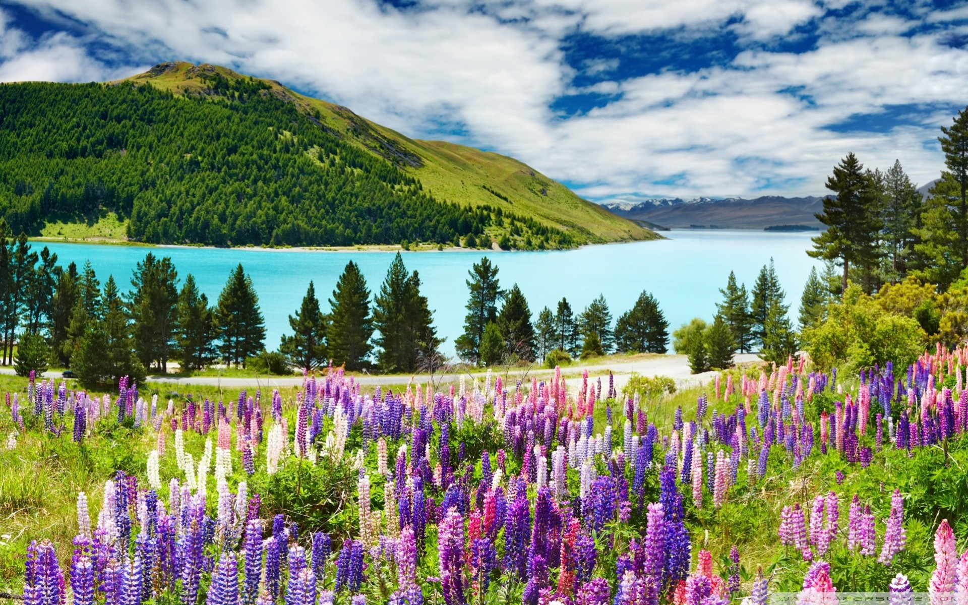 Красивые цветы поля горы