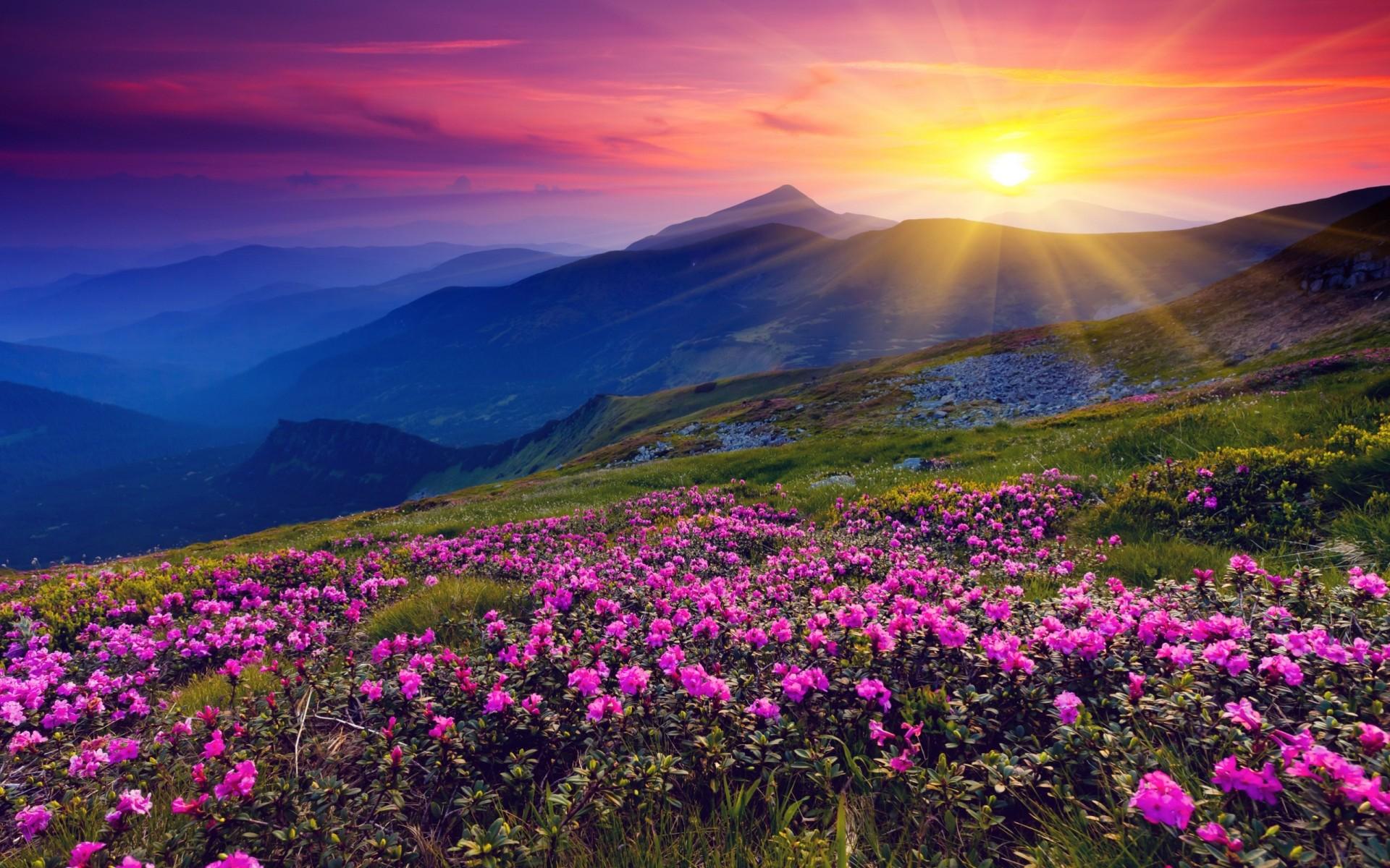 Фото красивых цветов hd