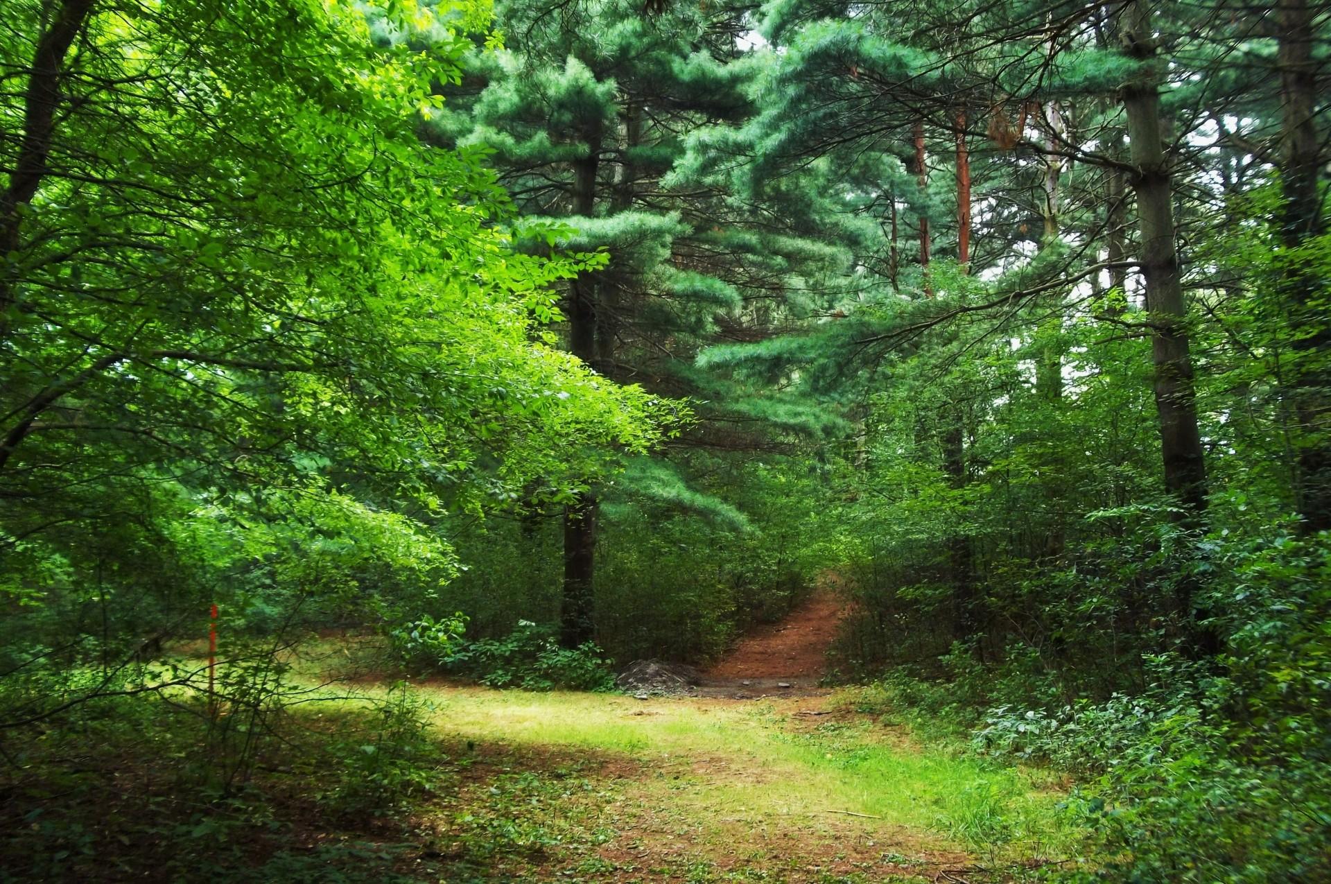 картинки на фон природа лес боли