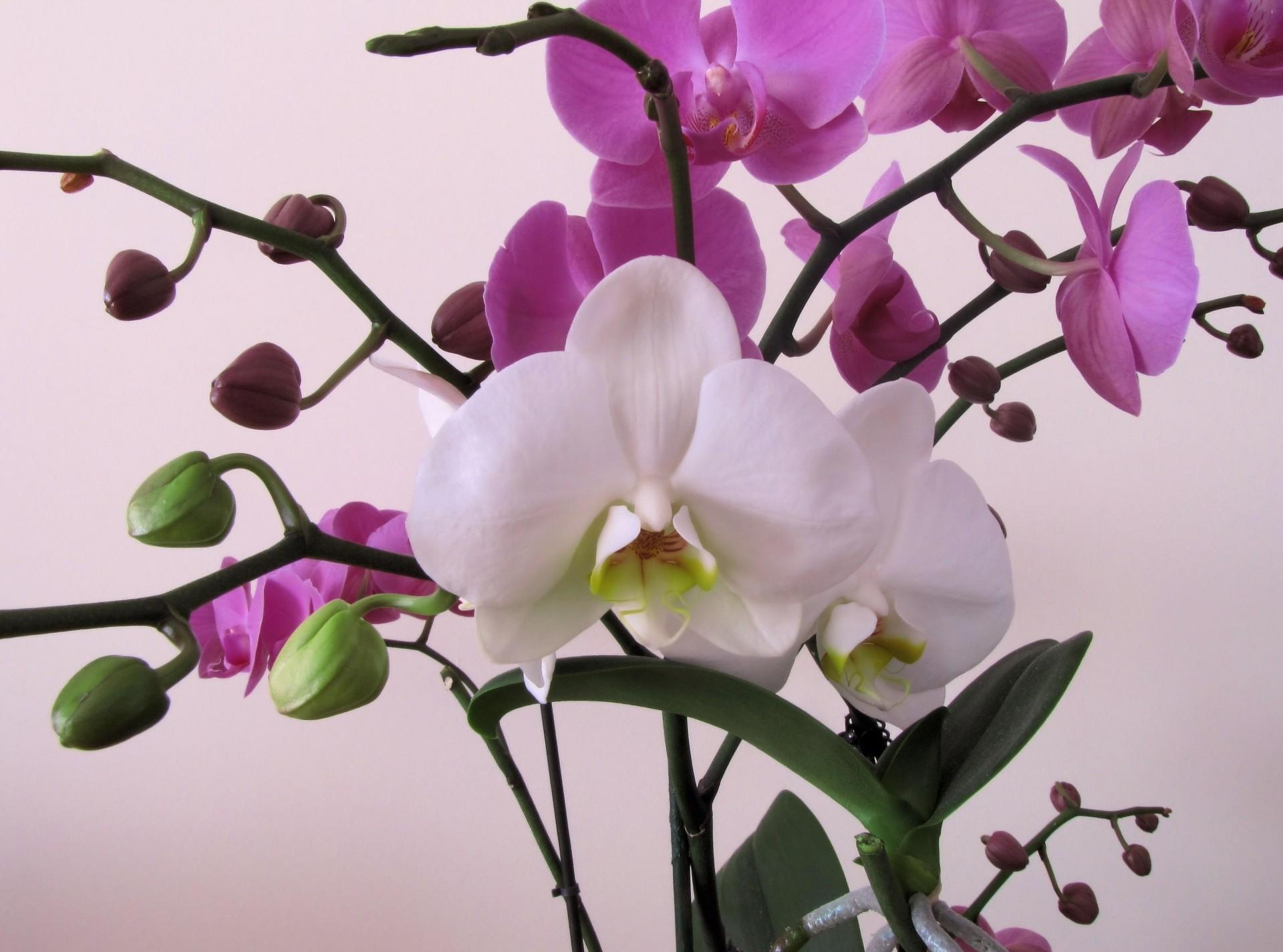 Картинки с орхидеями красивые