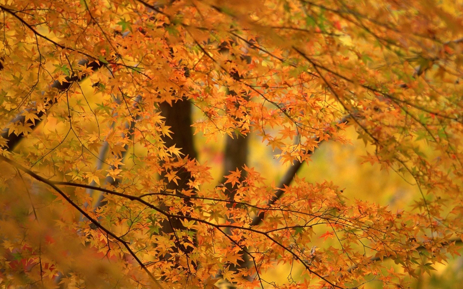 приготовить специальный фон для фотографии осень того