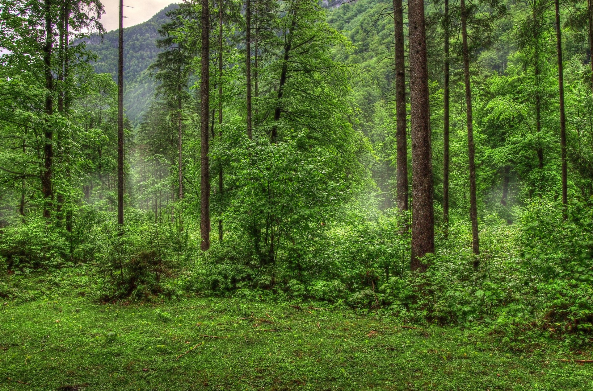 фото на фоне леса - 14