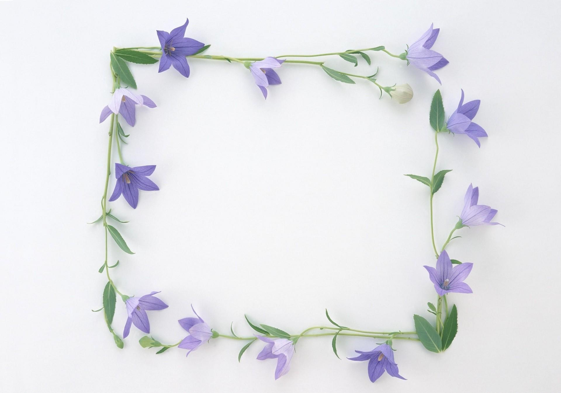 Бубенчики цветы