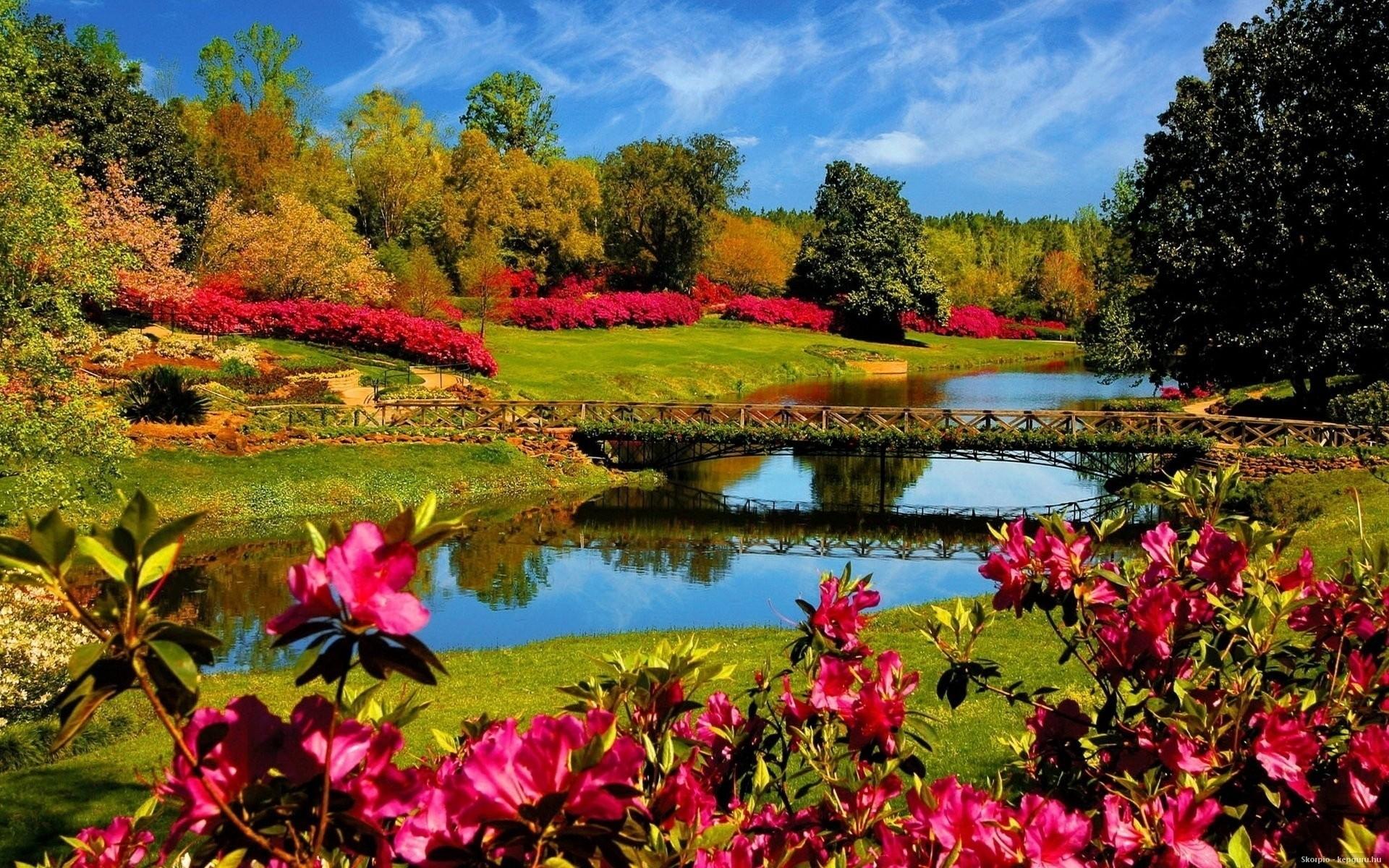 Красивые с цветами на природе