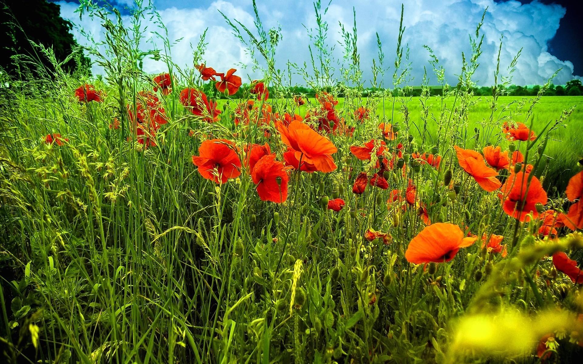 Трава цветы поле луг загрузить