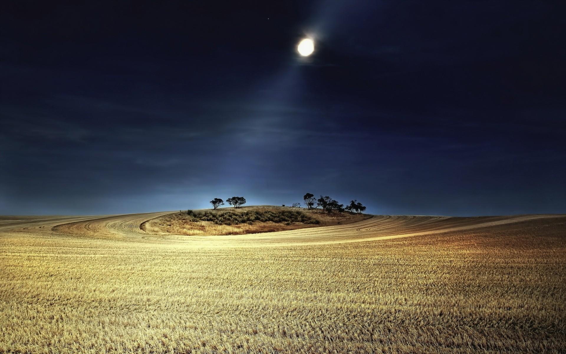 гарантируют высокий картинки в поле ночью может
