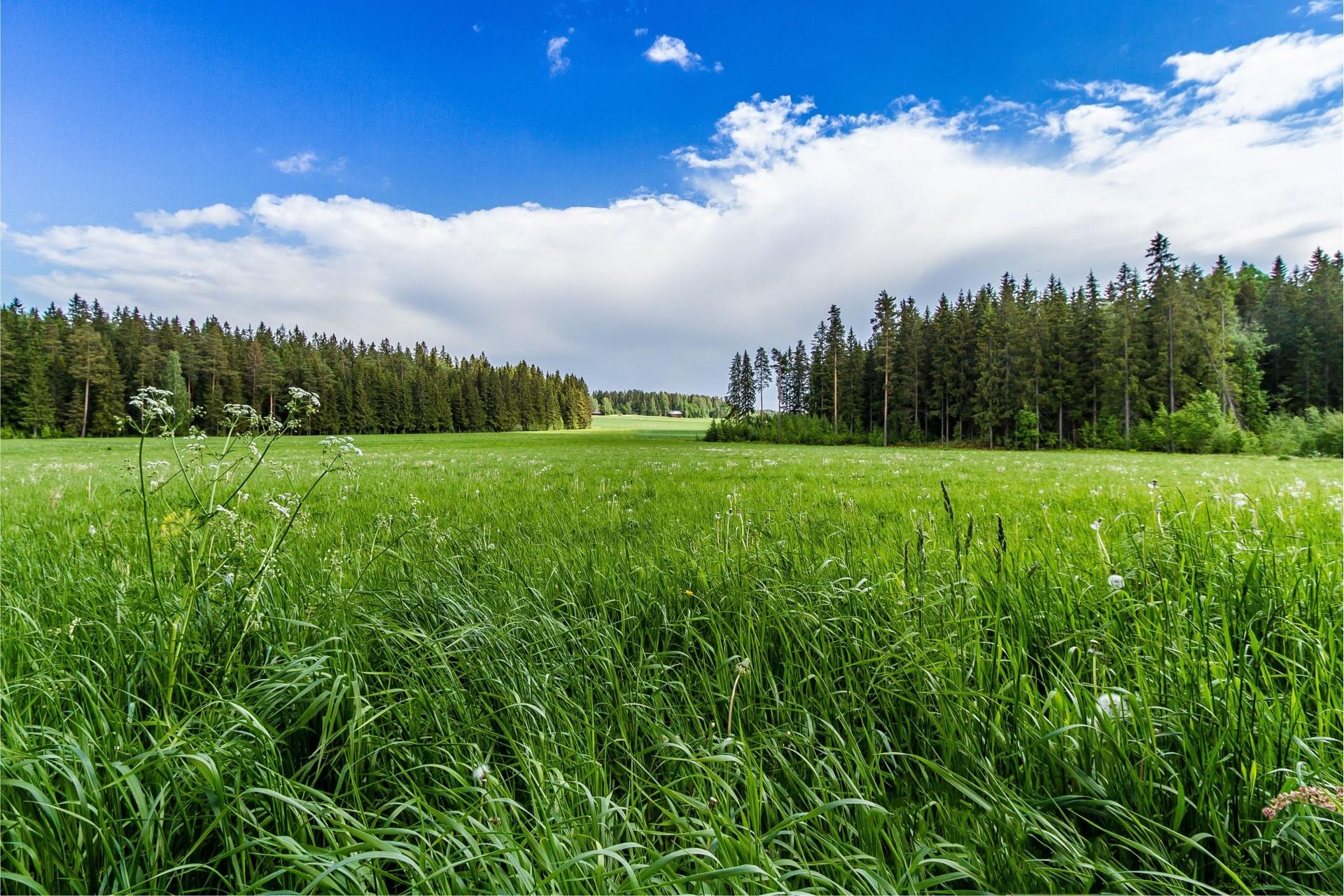повседневных открытки с полем и лесом показала, что