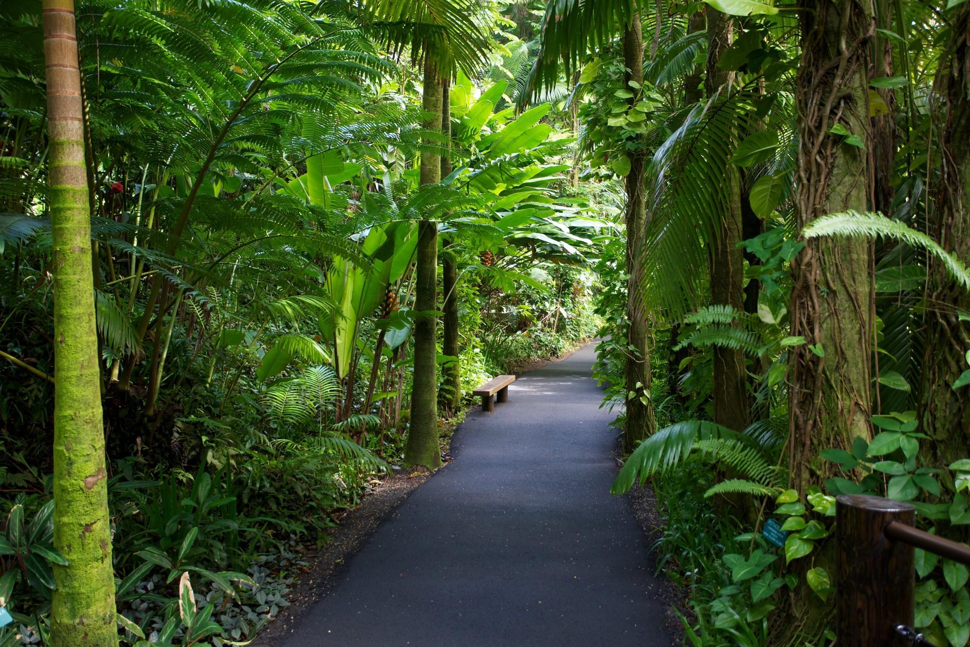 прошлом тропический сад гавайи фото материал однотонный или