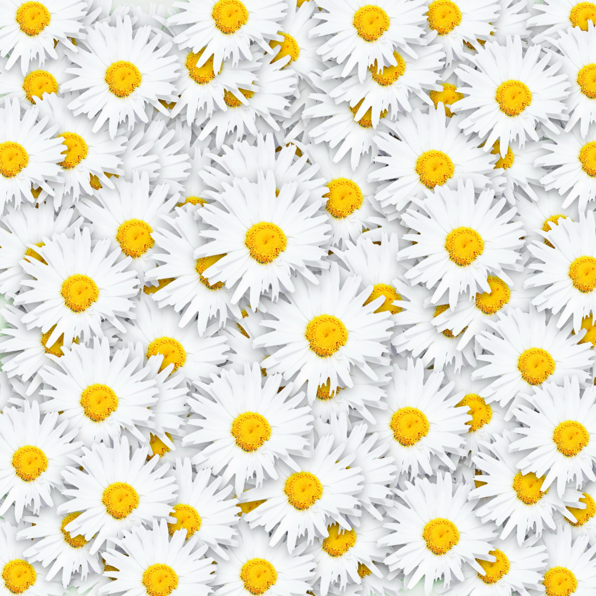 ромашки узор chamomile pattern загрузить