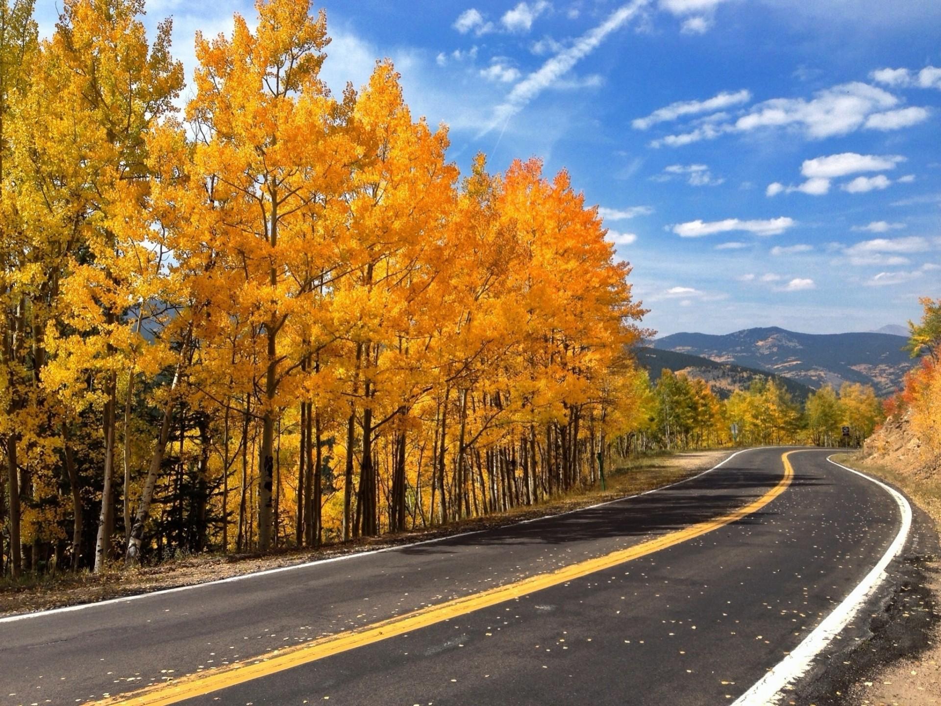 категорию фотографии осень дороги является автором