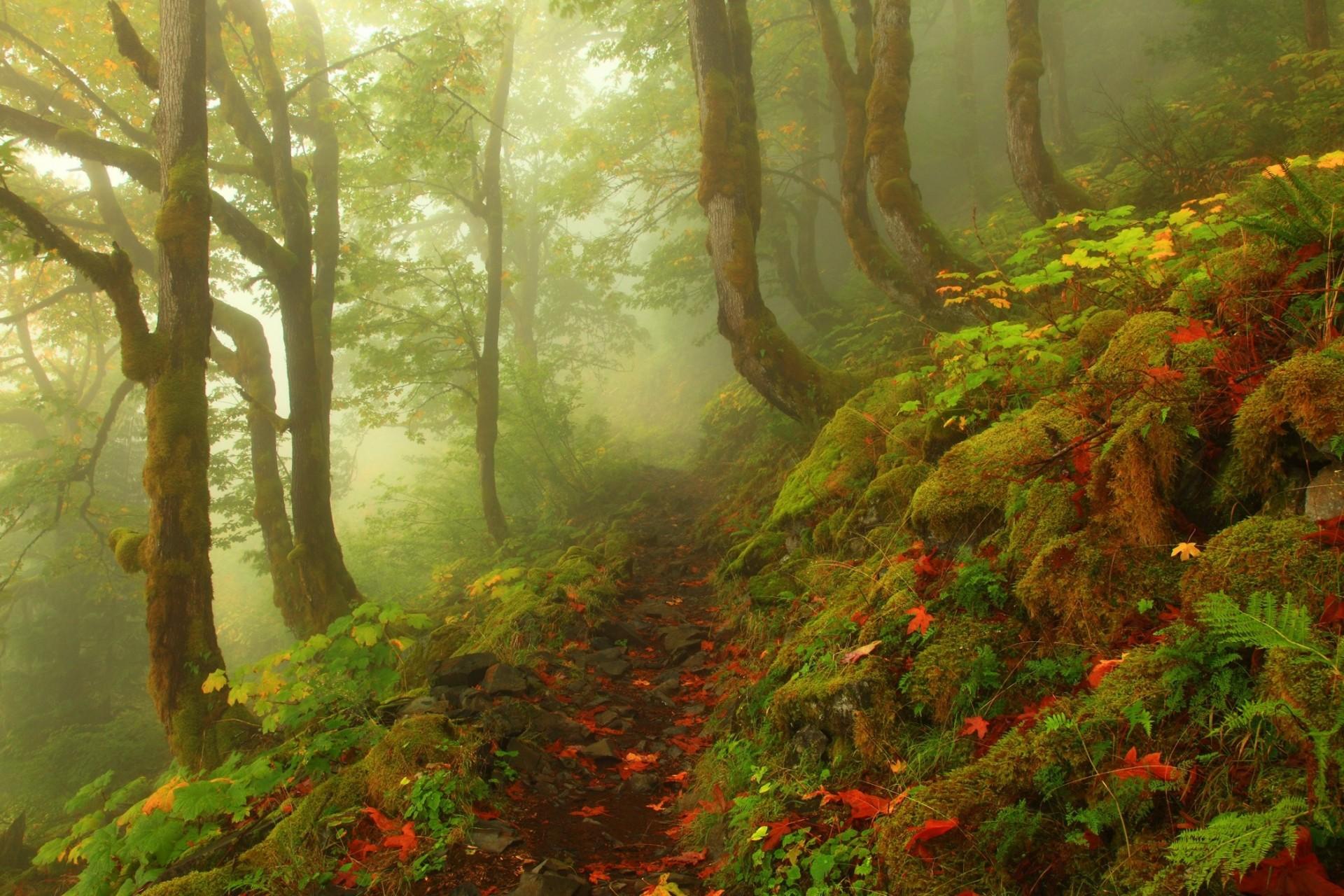 красивая открытка леса меня всегда