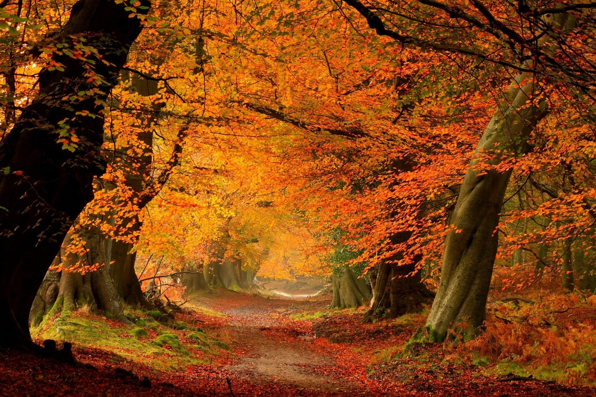 деревья парк осень роща  № 3186078 загрузить