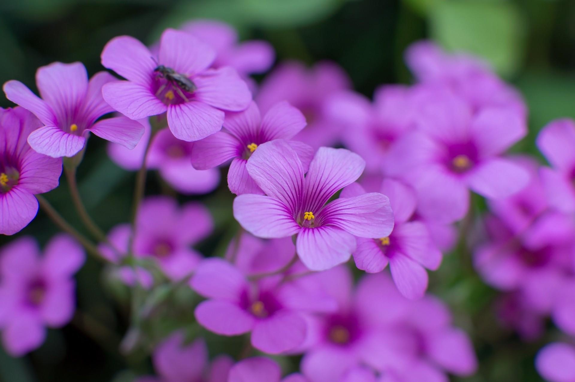 Фото сиреневых цветов в высоком качестве