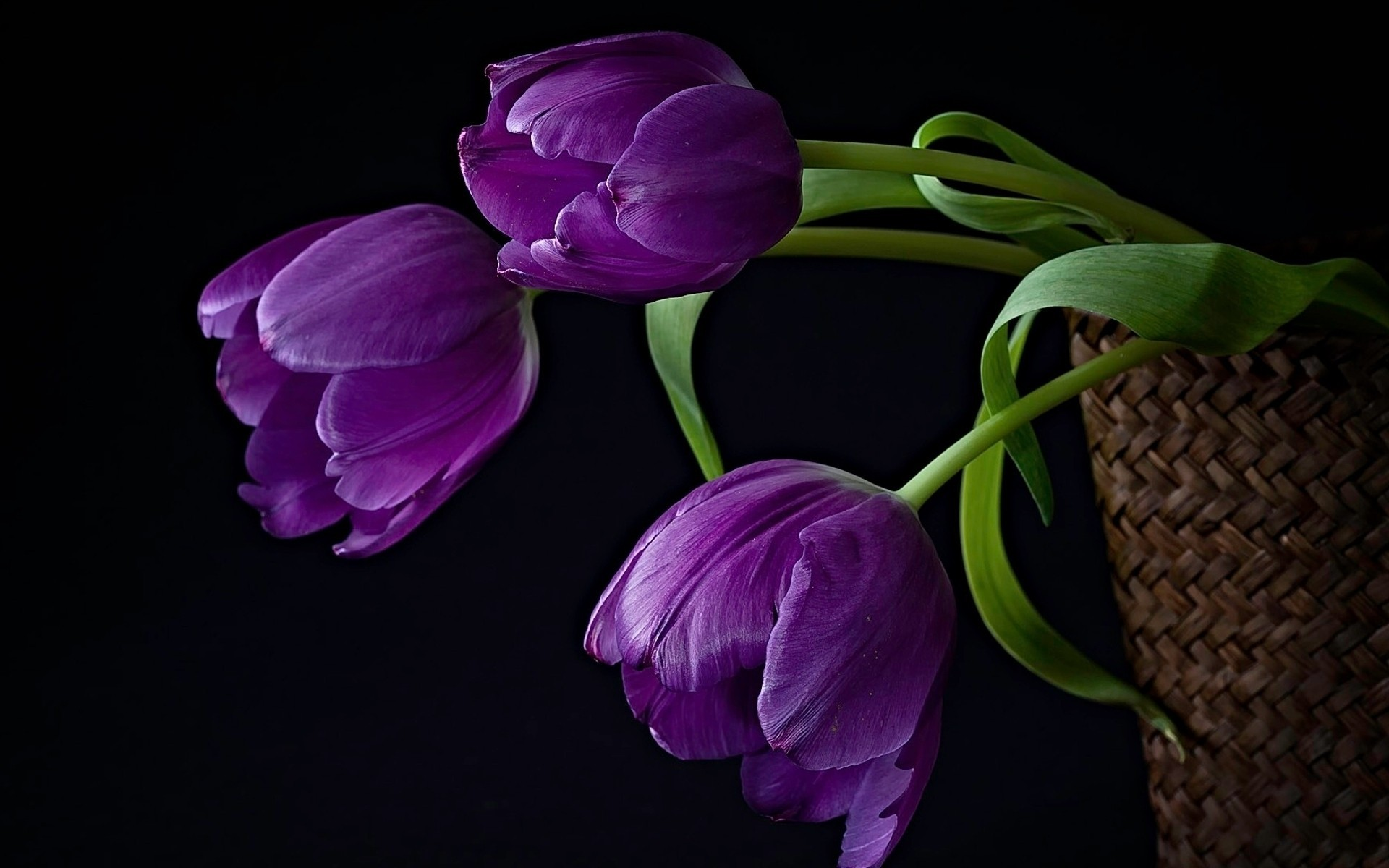примерила наряд фото тюльпанов на фиолетовом фоне этой