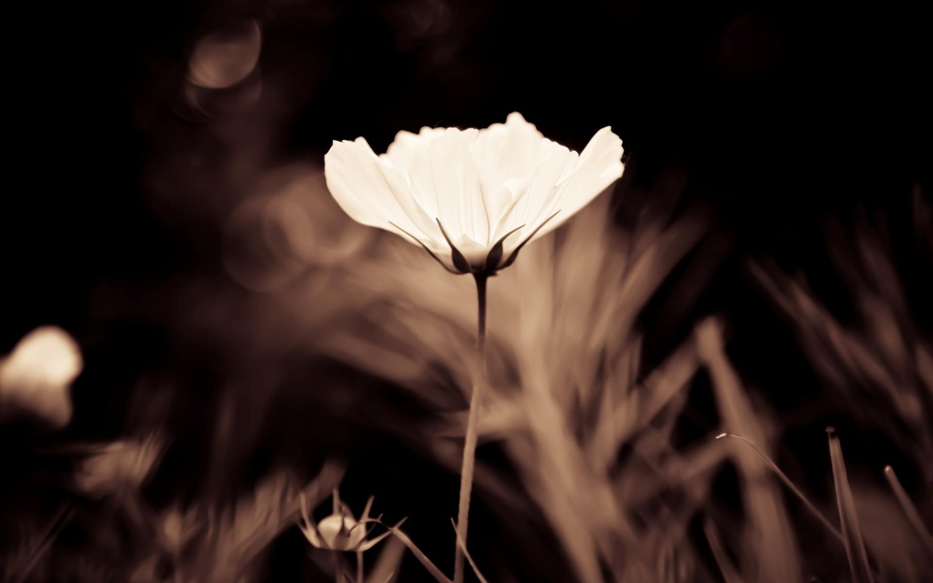 Бело коричневые картинки